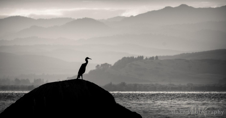 Heron by MikeGannaway