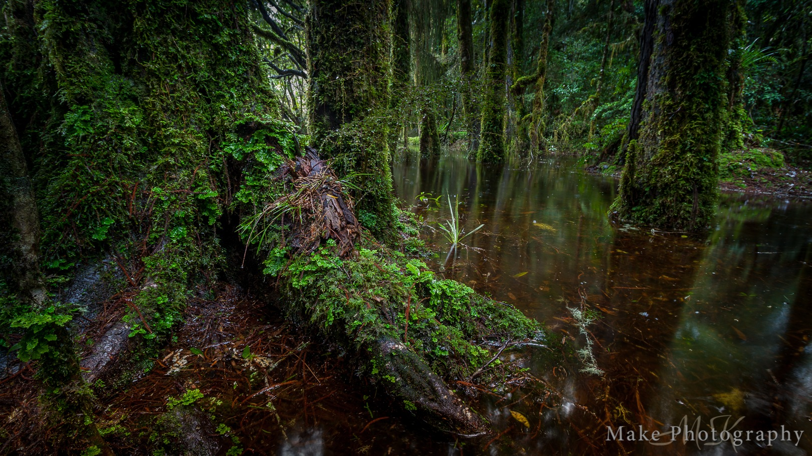 Flooded Forest by MikeGannaway