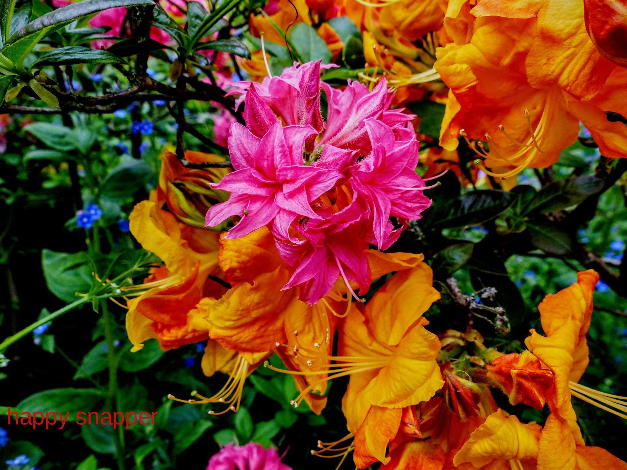 Vibrant Colours of Love  by Ian Popple