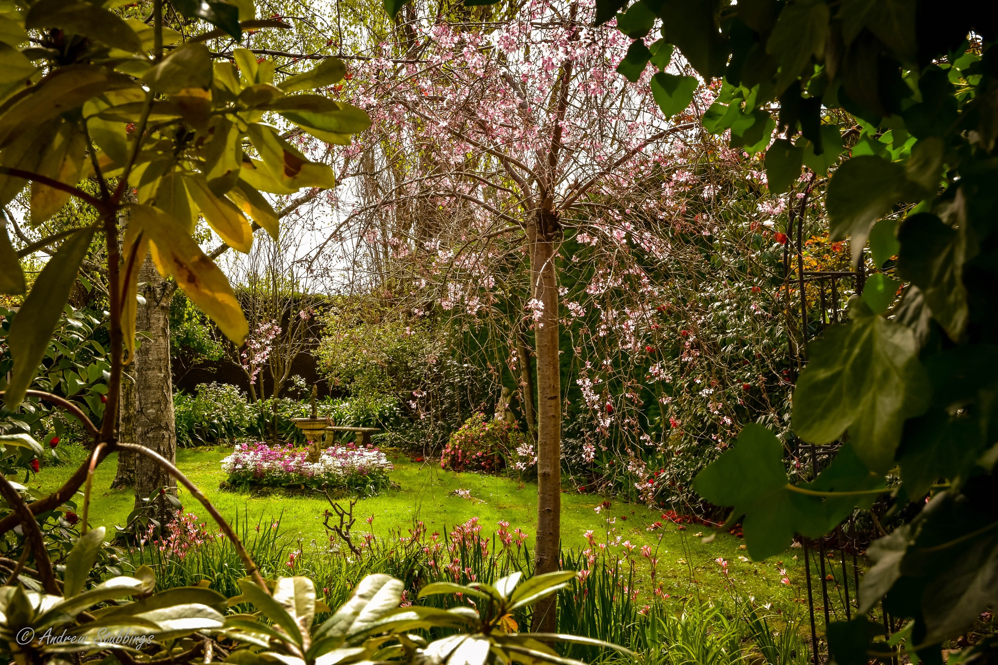 Through a garden window by Andrew Stubbings