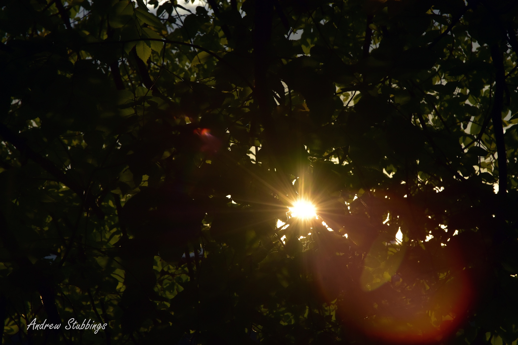 Morning light through the trees by Andrew Stubbings