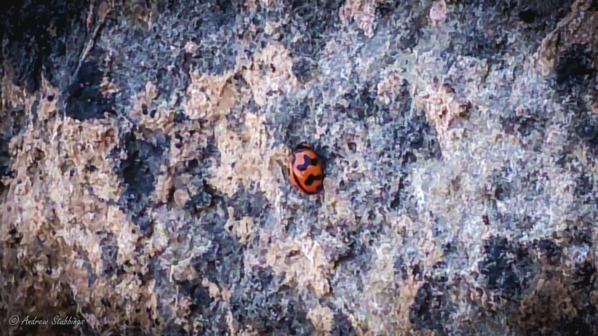 Ladybug by Andrew Stubbings