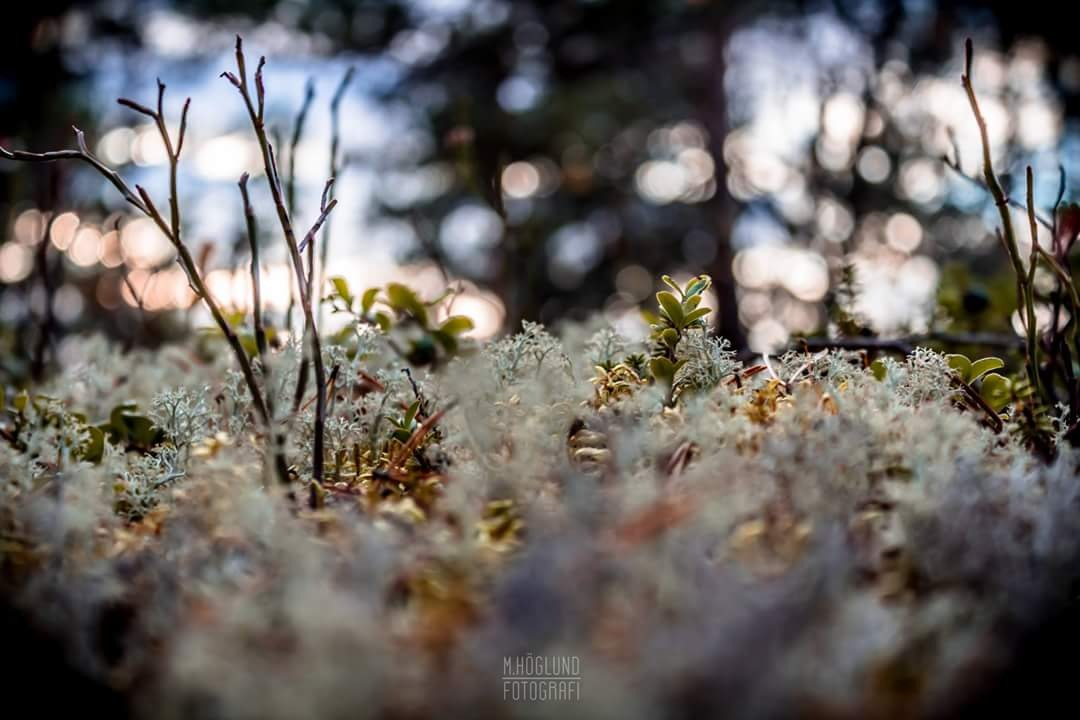 nature by hoglund
