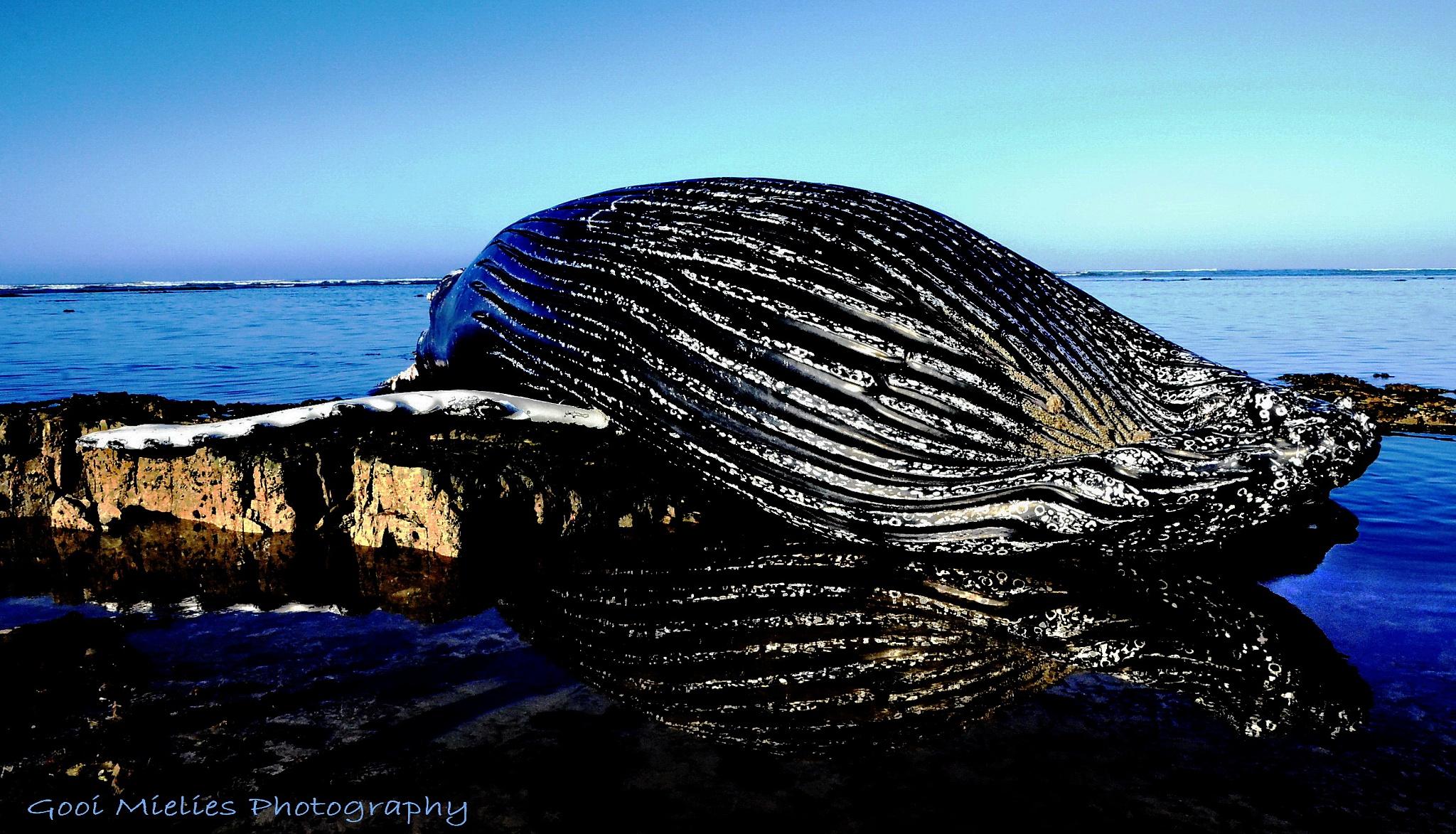 Whale by GooiMielies