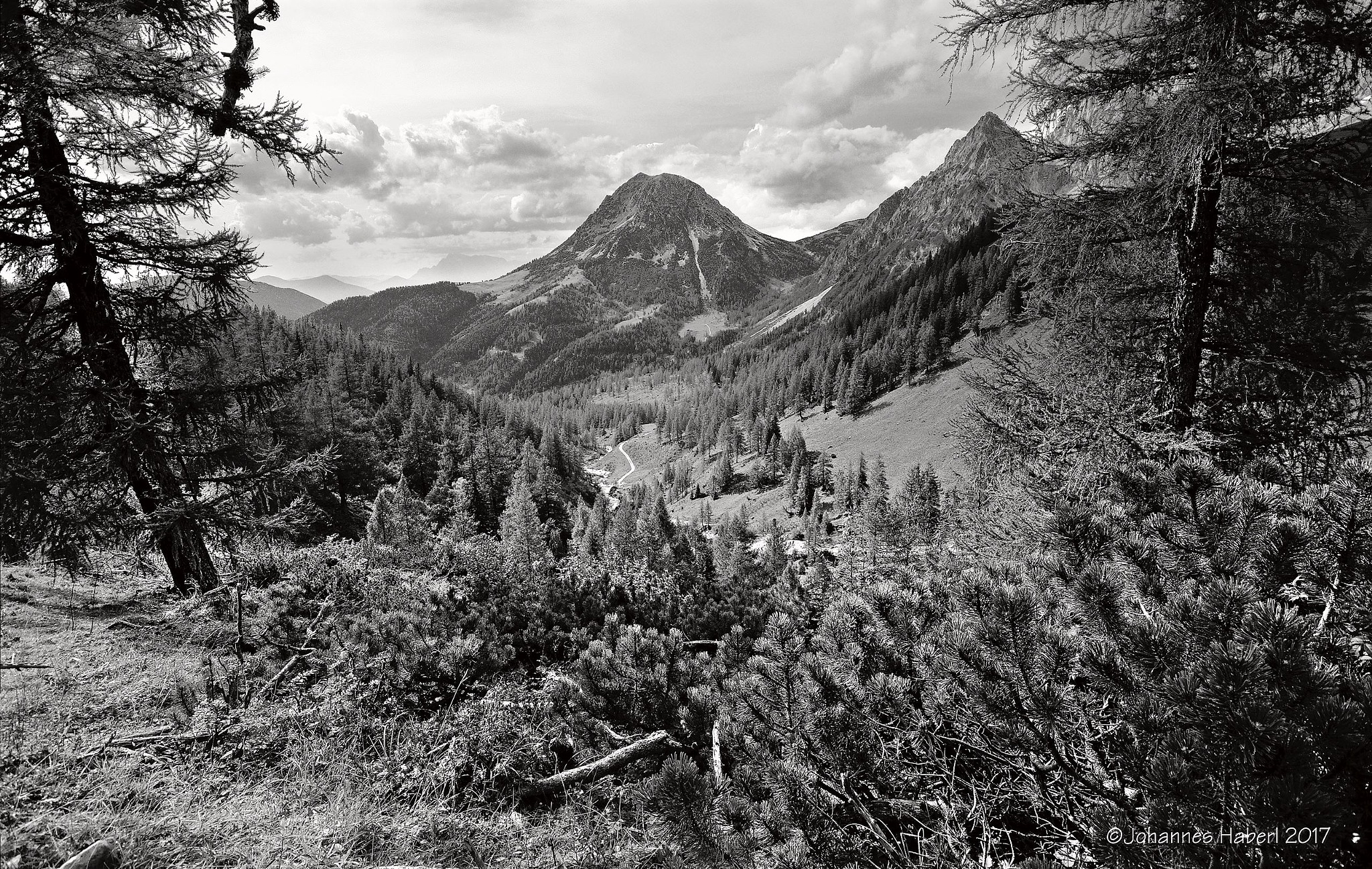 mountain pines, larchs, view to the valley & to Rettenstein (Röthelstein) / B&W by Johannes Haberl