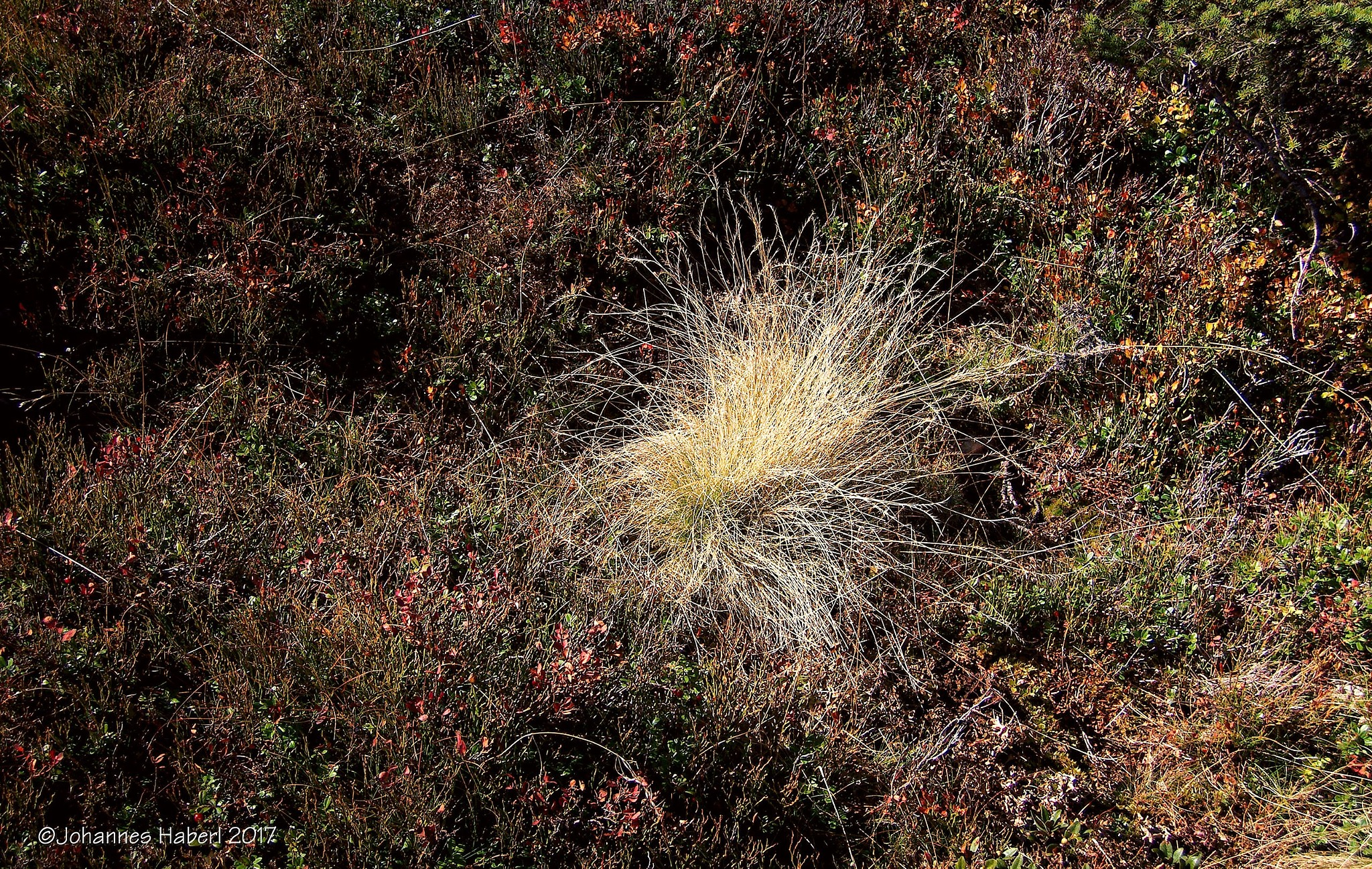 dry grass by Johannes Haberl