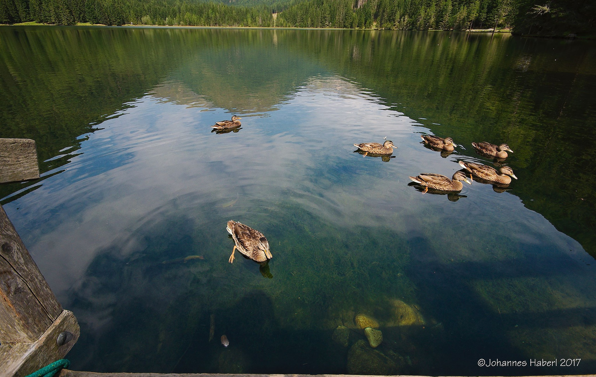 ducks - Etrachsee by Johannes Haberl