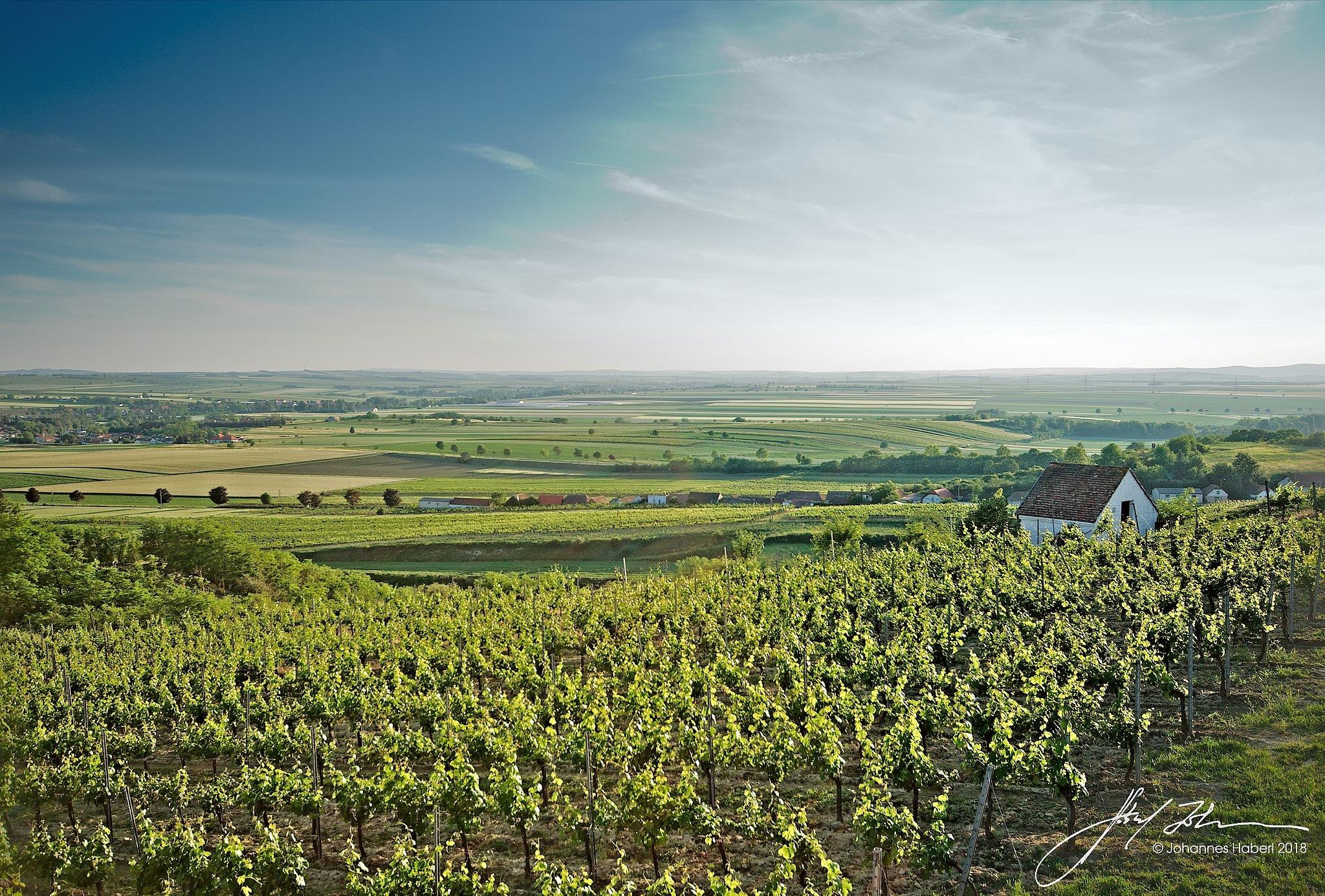 Schatzberg vineyard & cellar-house, view to the plain by Johannes Haberl