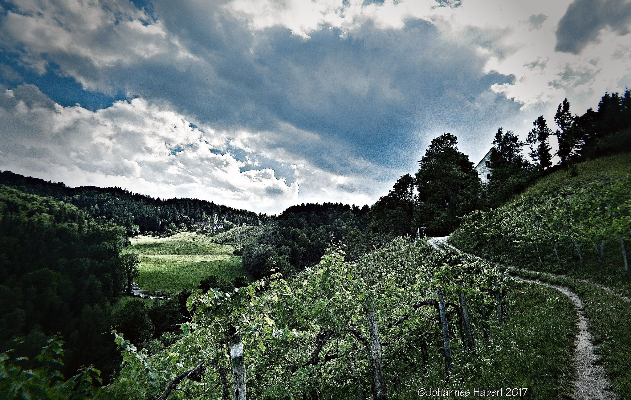 light & shadows - way back, trough the vineyards / high contrast by Johannes Haberl