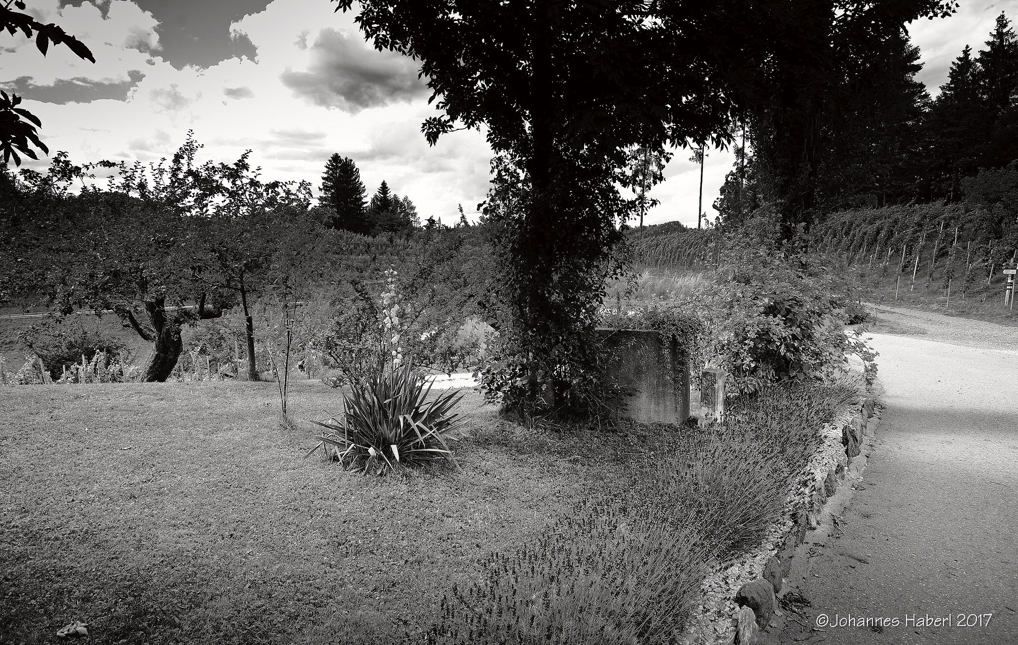 vineyard at Oberguess / B&W by Johannes Haberl