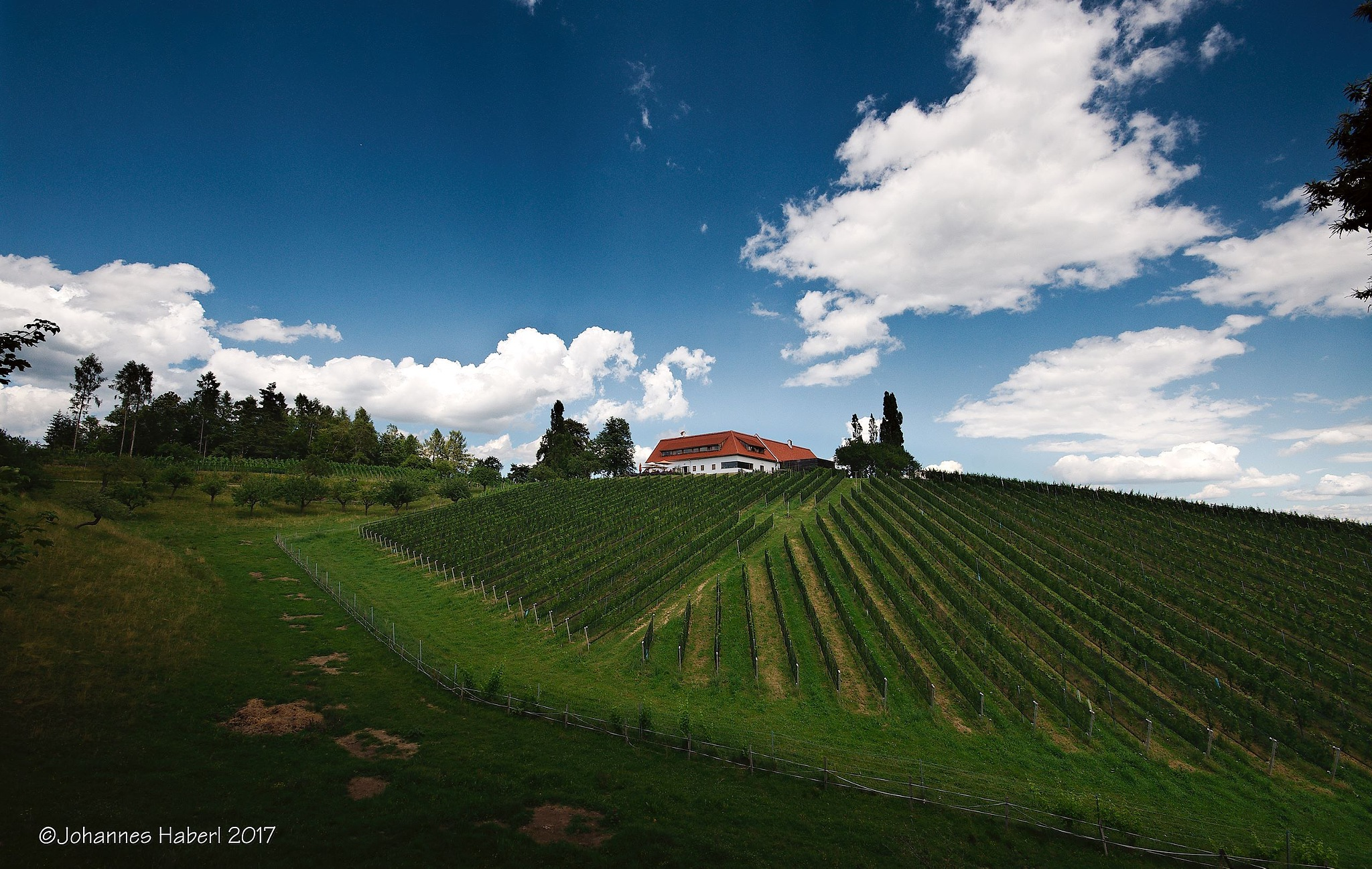 """vineyard and """"Buschenschank"""" Oberguess - clouds are wandering fast by Johannes Haberl"""