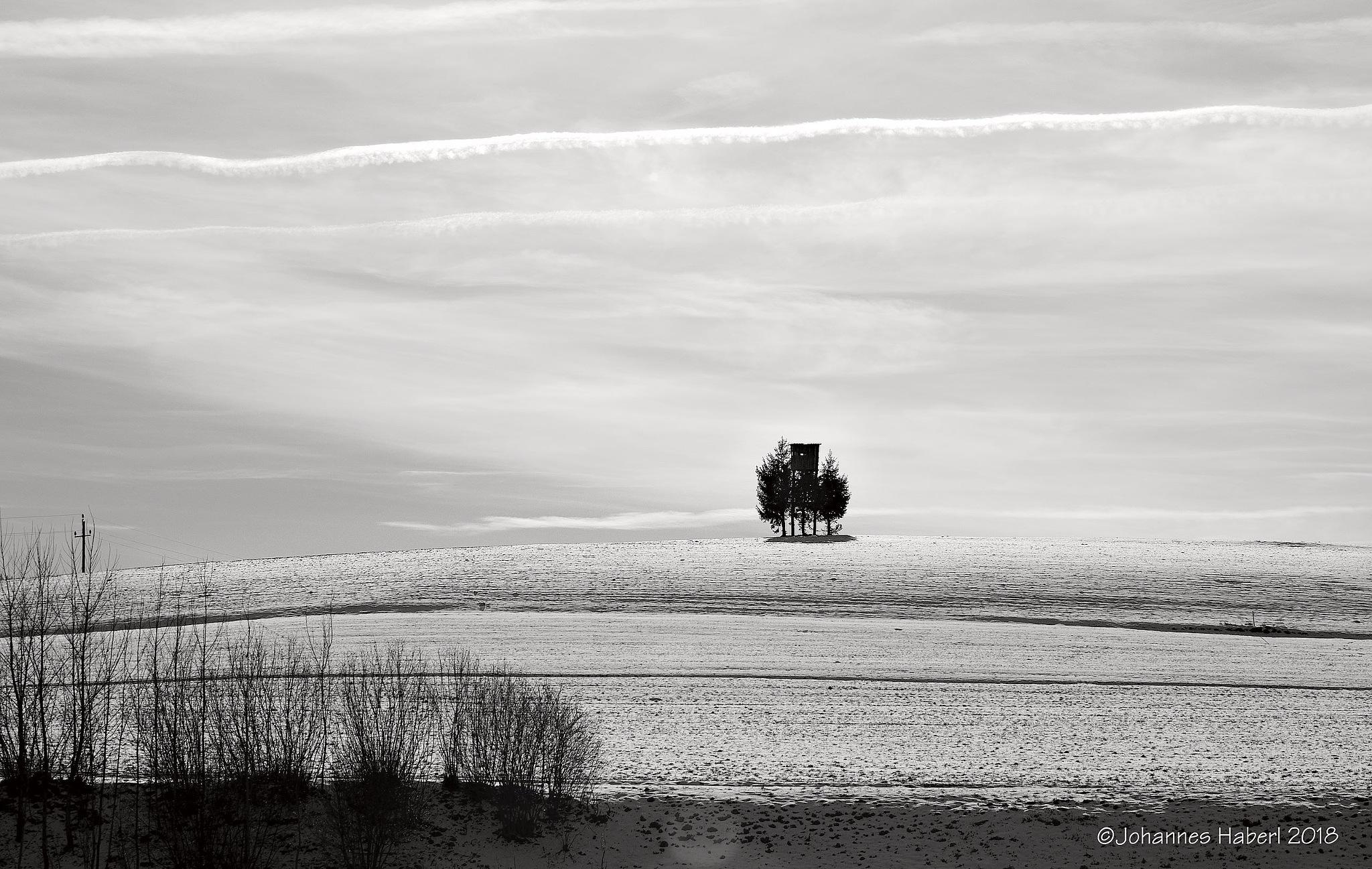 Photo in Rural #raised hide #trees #feistritz bei knittelfeld #black & white
