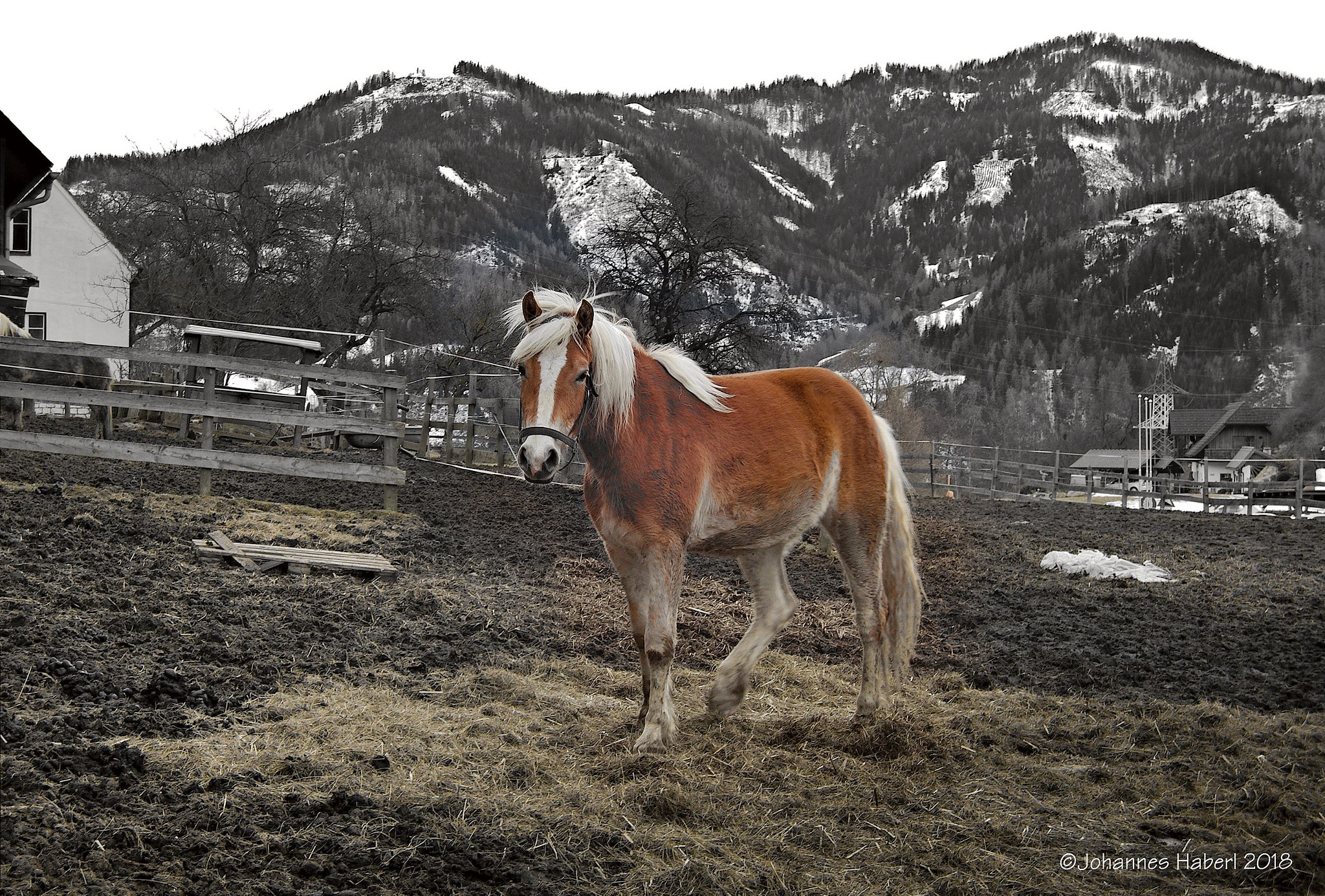 horse & landscape / B&W + color by Johannes Haberl
