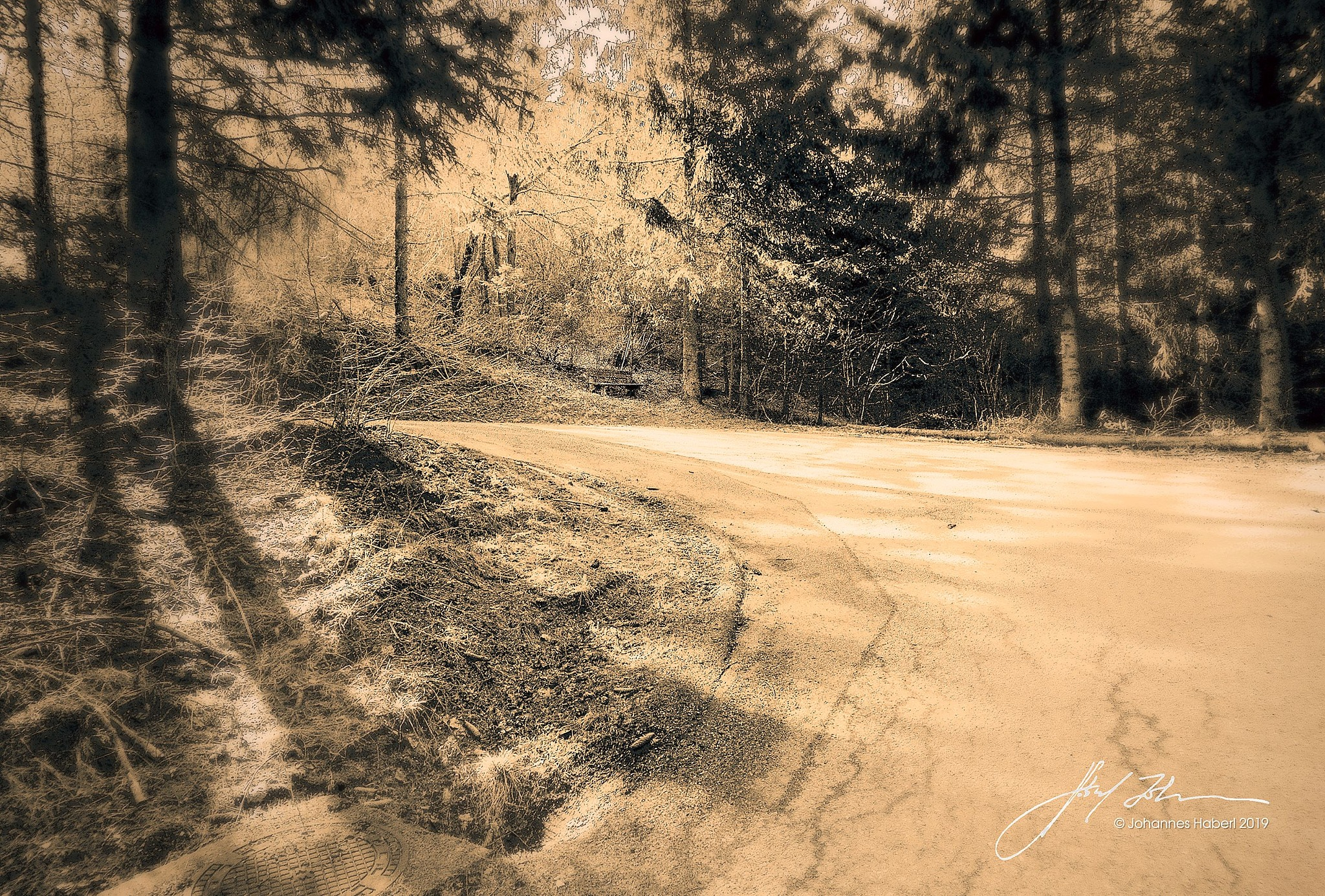 road through the woods / B&W toned by Johannes Haberl