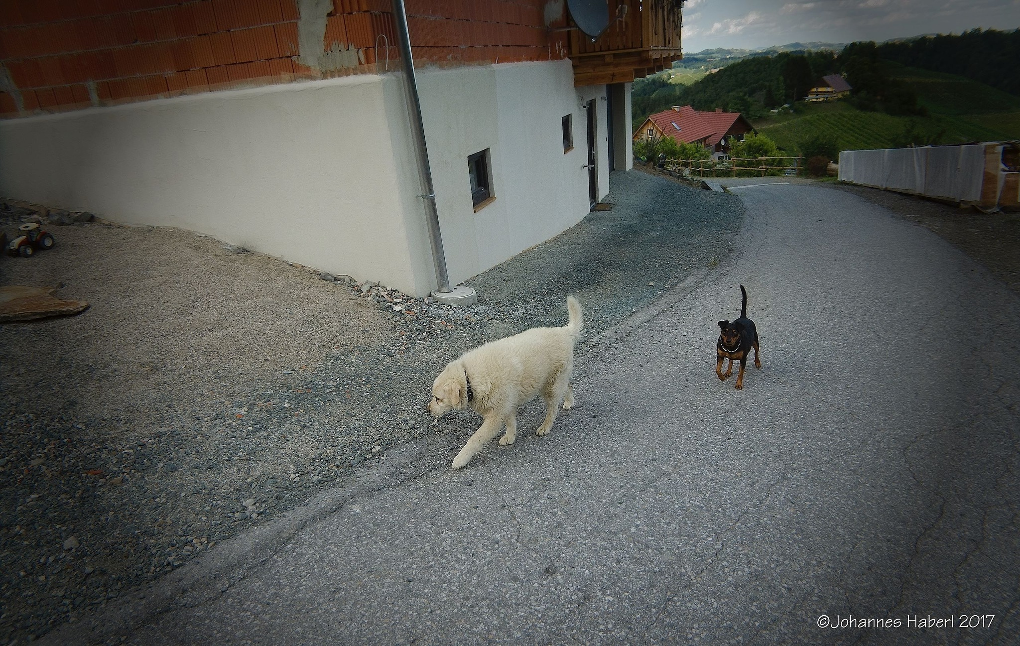 two dogs by Johannes Haberl