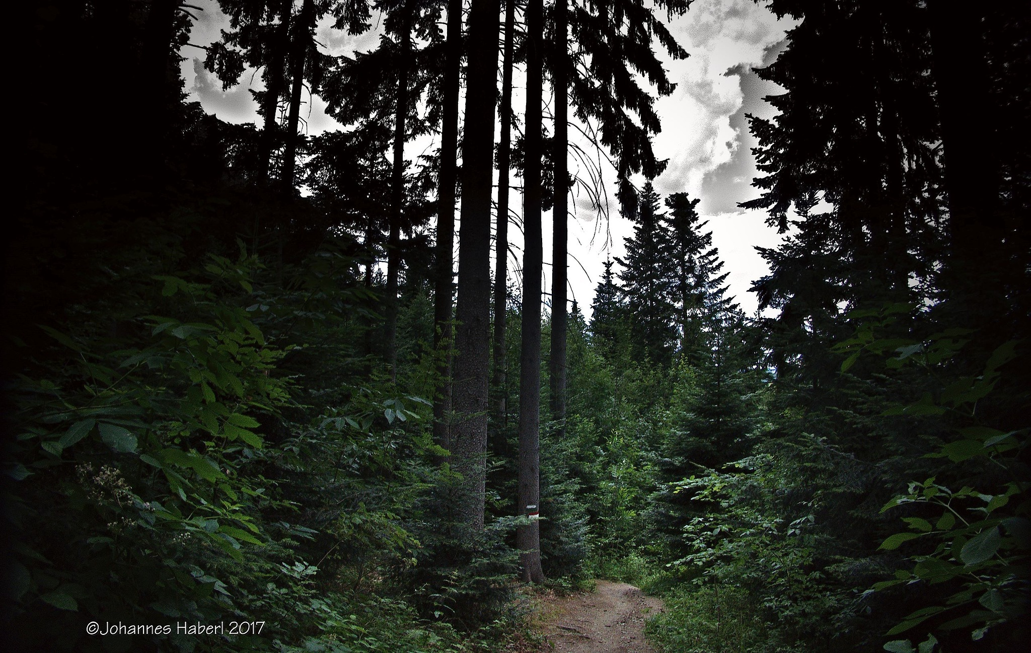 through the forest by Johannes Haberl