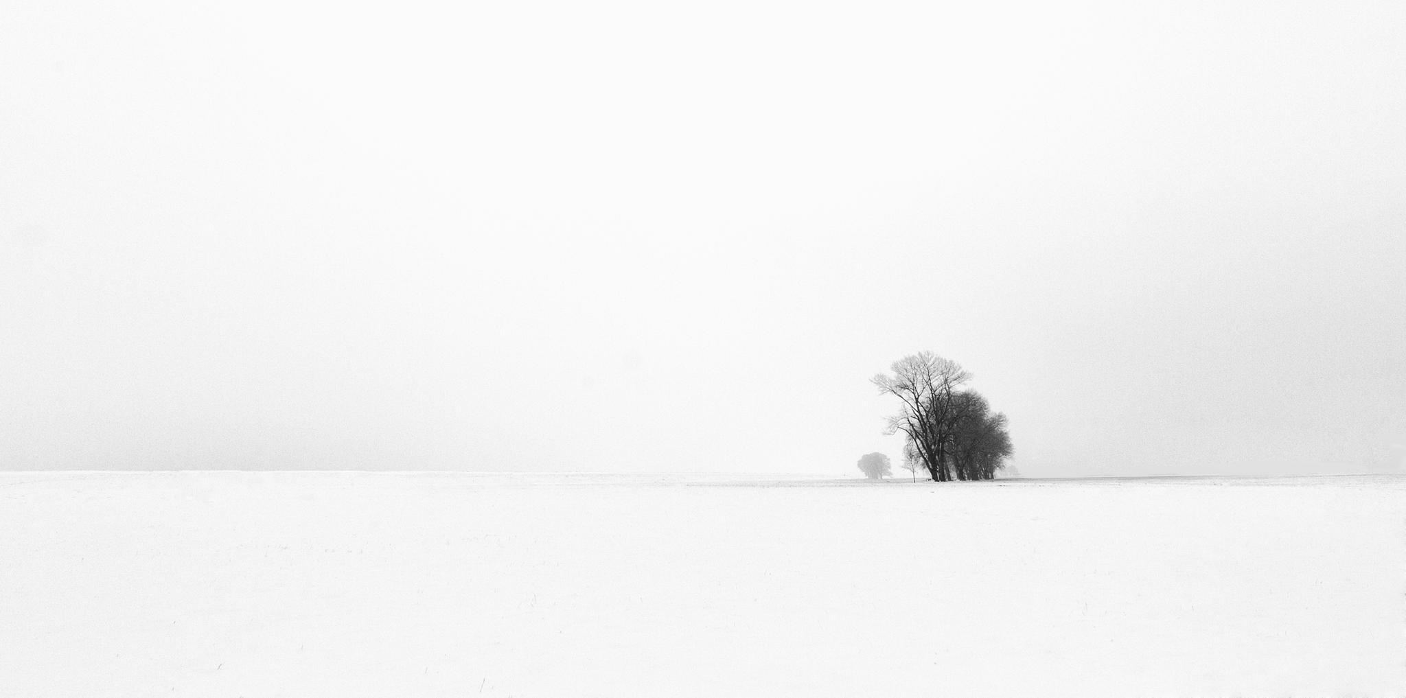 Wintertrees by Jan Neumann
