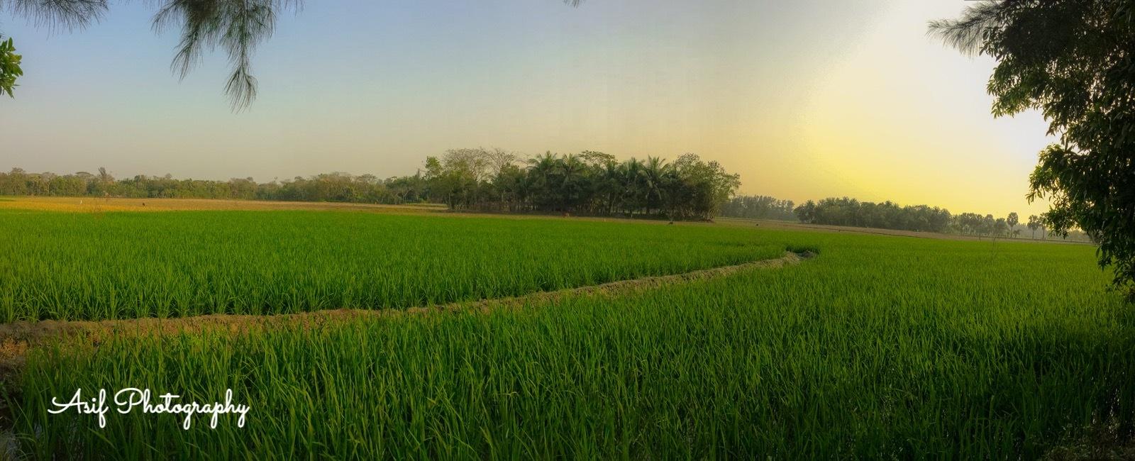 Green field  by Asif