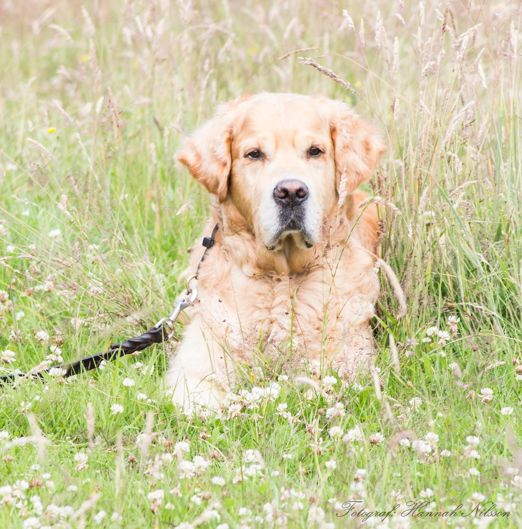 Dog by Hnilssonphoto