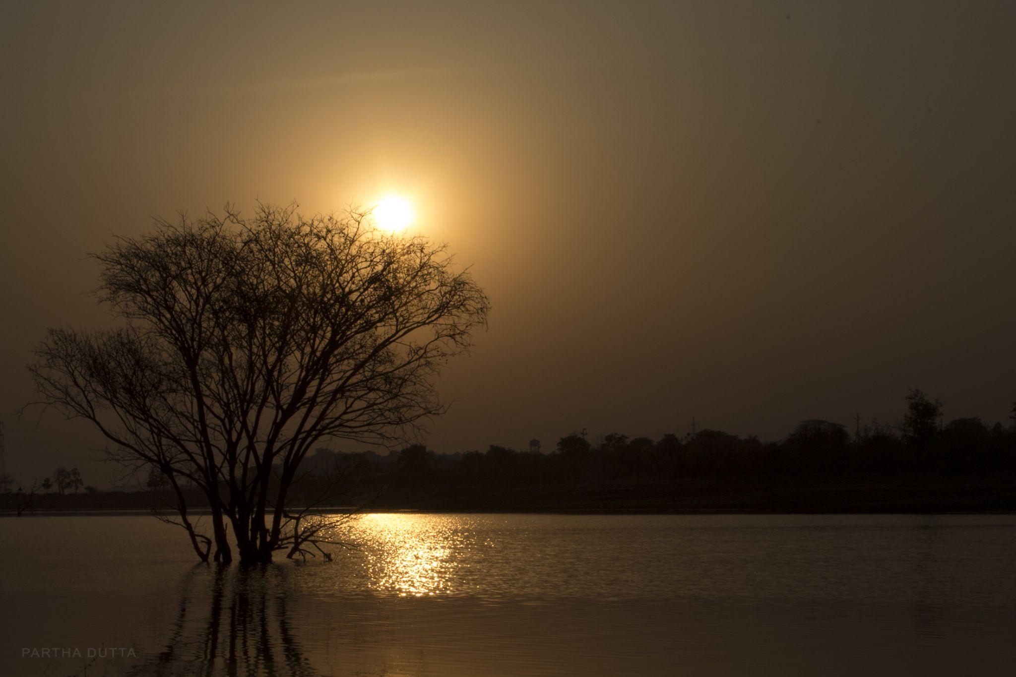 GOLDEN HOUR by Partha Dutta