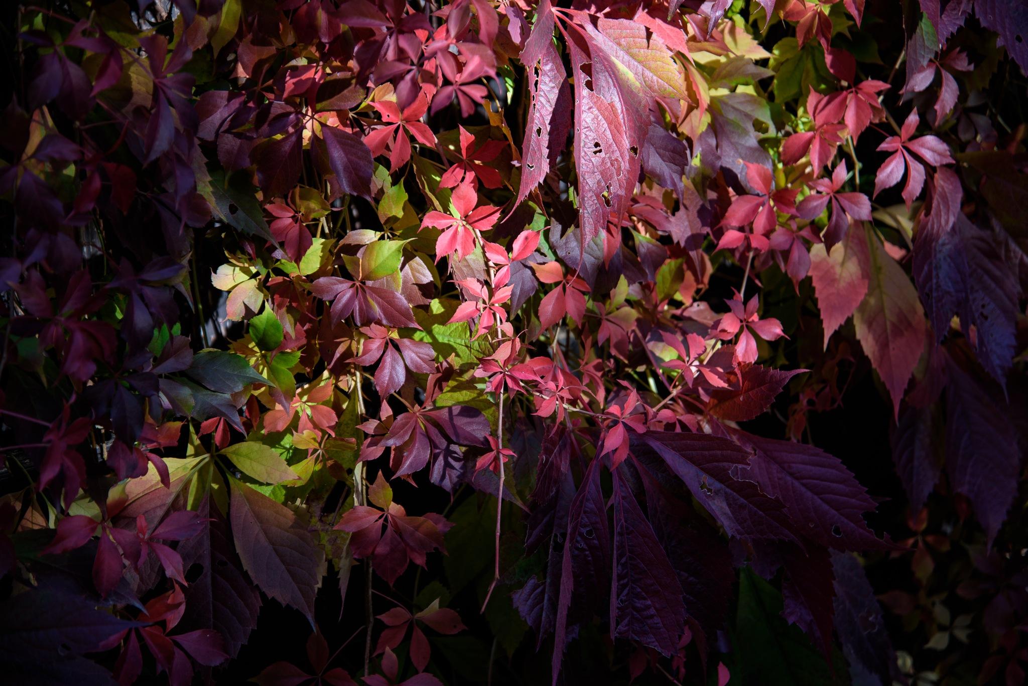 Herbstfeuer by > Robert Braun <