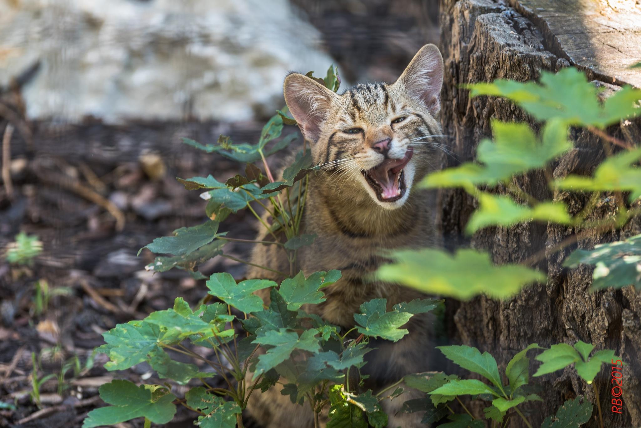 Miau by > Robert Braun <