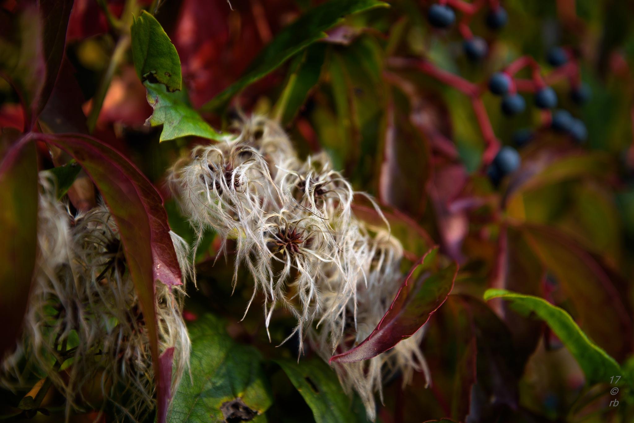 Herbst Pur 2 by > Robert Braun <