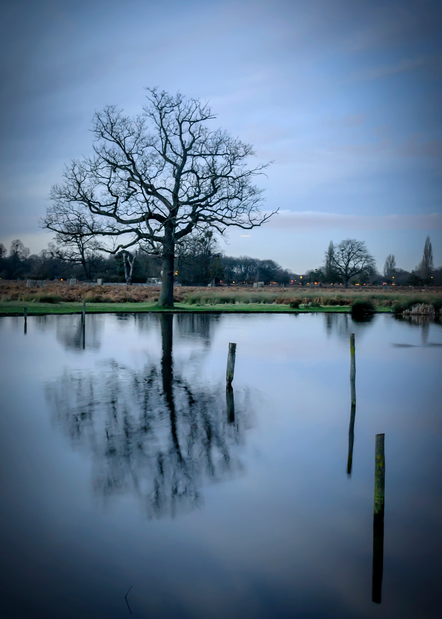 A Tree reflected on Pond by Massimo Crisafi