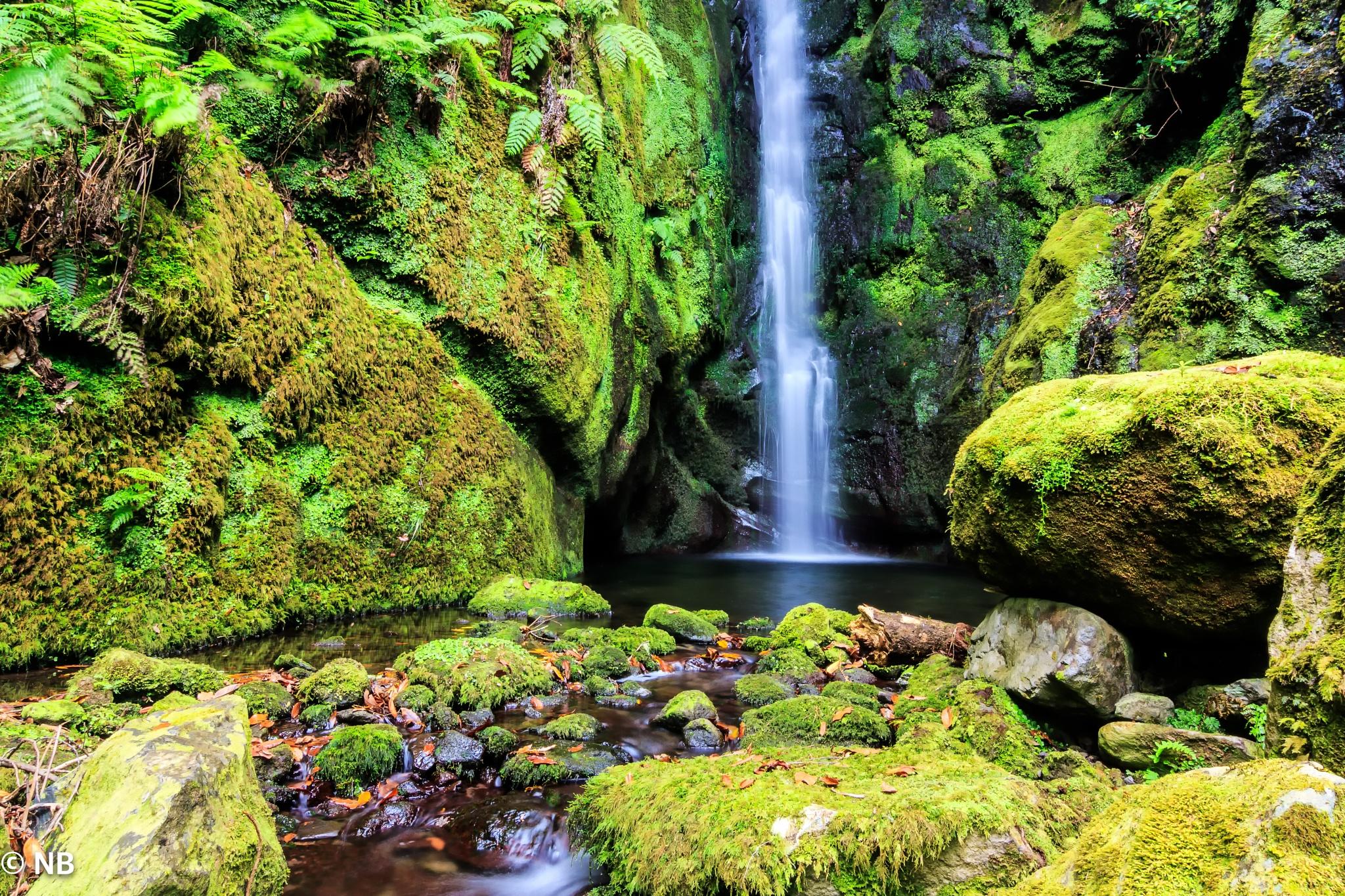 Ribeira da Camisa - Ponta Delgada - Madeira Island!!! by UMAchem