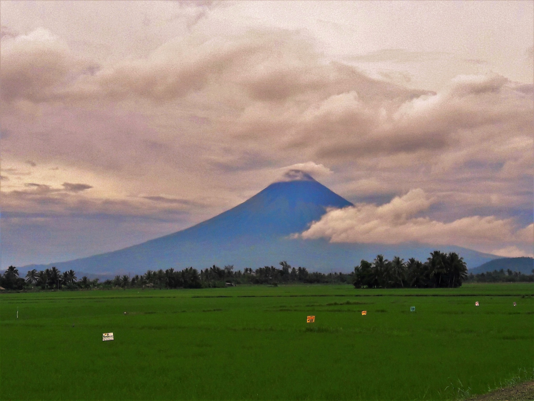 The Perfect Cone from a Rice field. by Mae Emerald