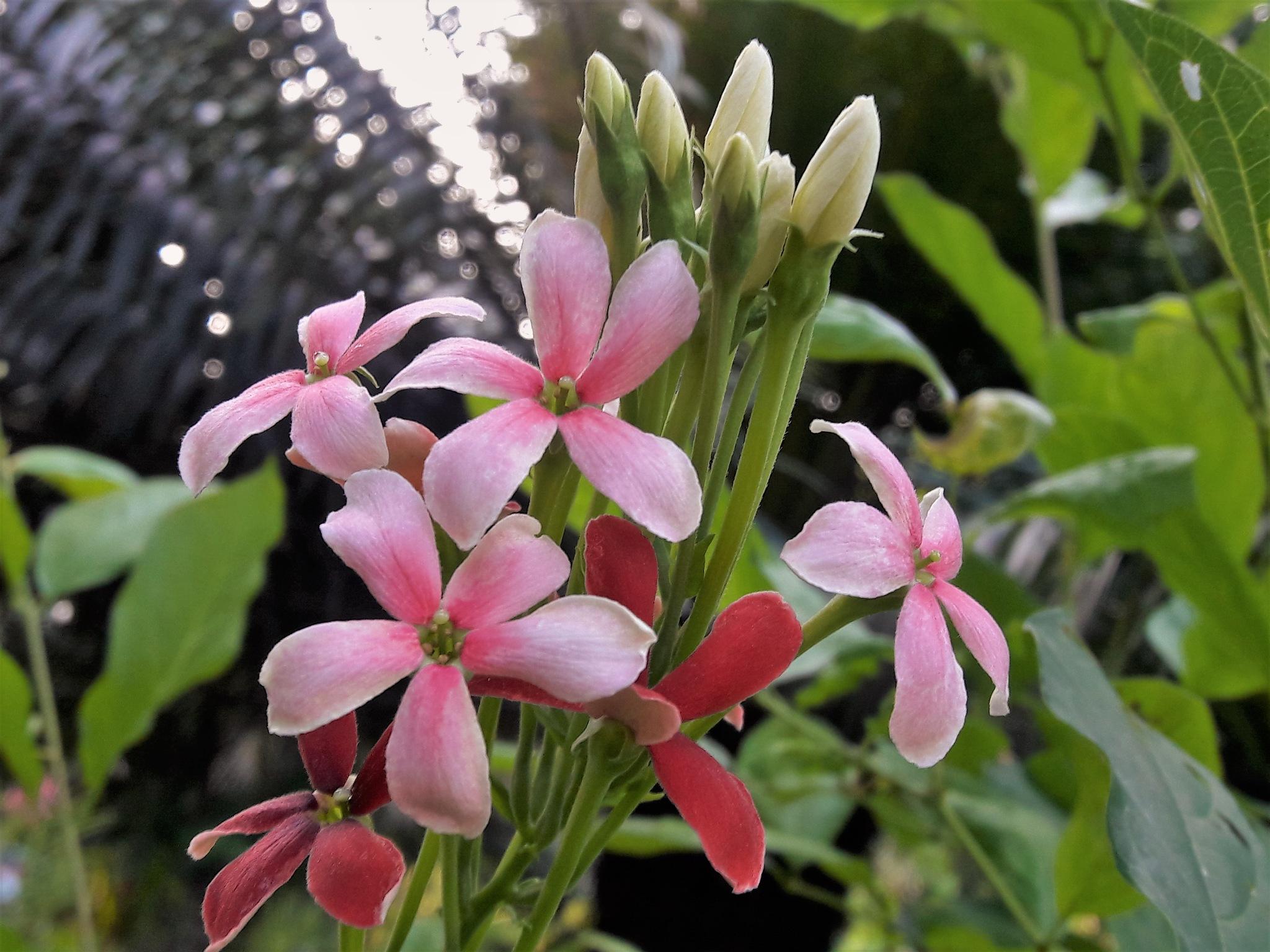 Magic Flower by Mae Emerald