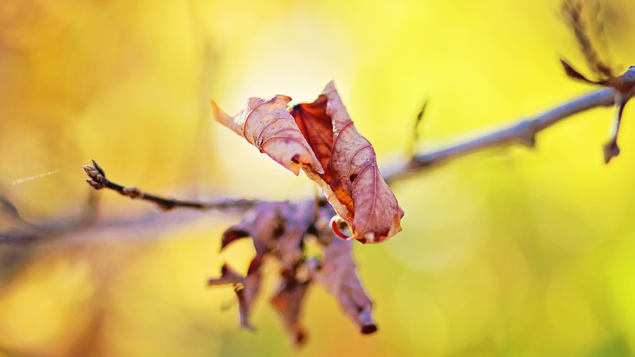 """""""Be like a tree and let the dead leaves drop""""~Rumi~ by SandraHK"""