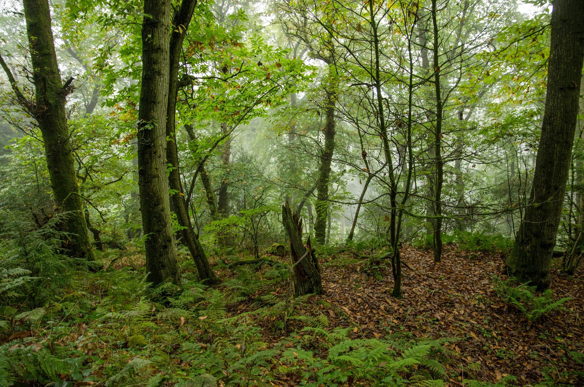 Misty forest by bfstubbs