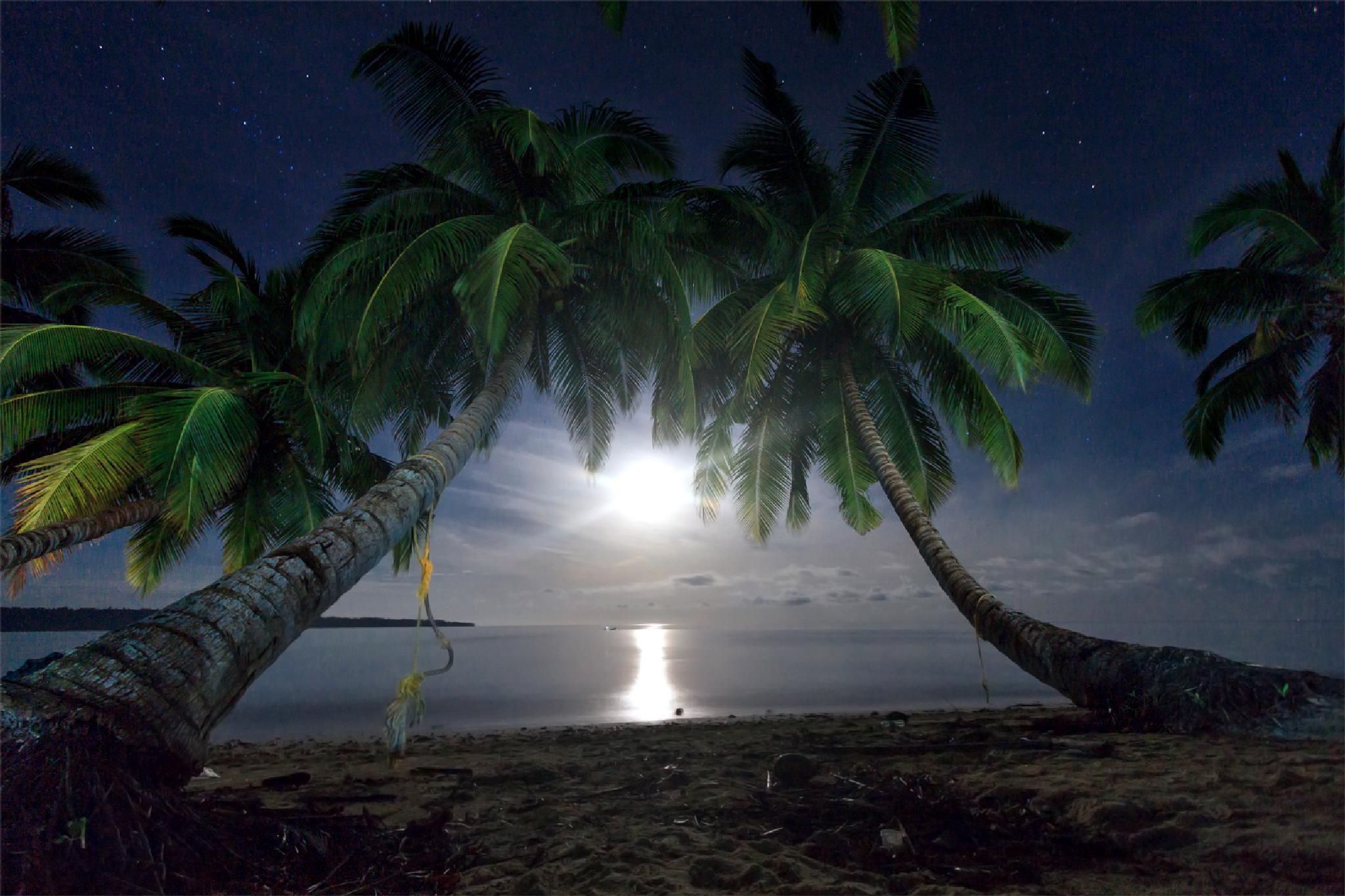 Photo in Landscape #palm #moon #light #beach #island #andaman #india #landscape #nightscape #stars