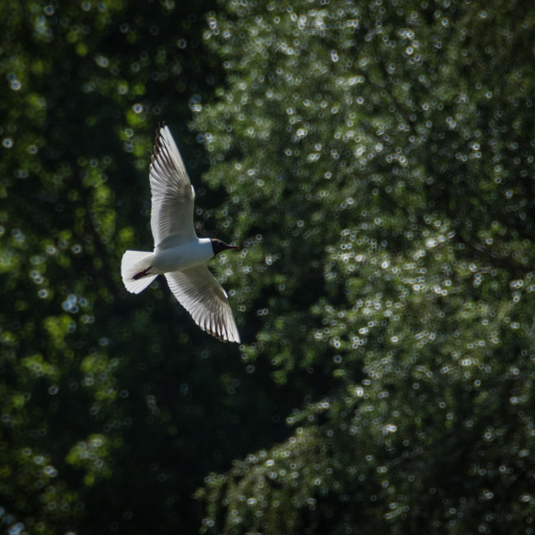Birds by Haveetje