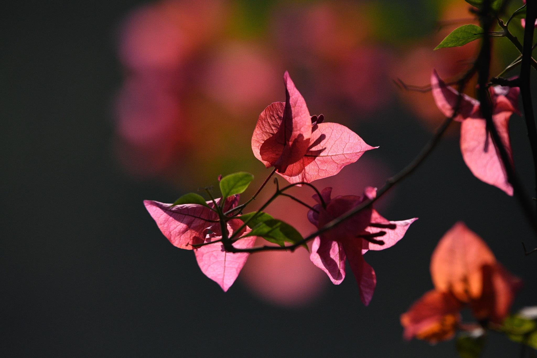 Untitled by Vijay Paul