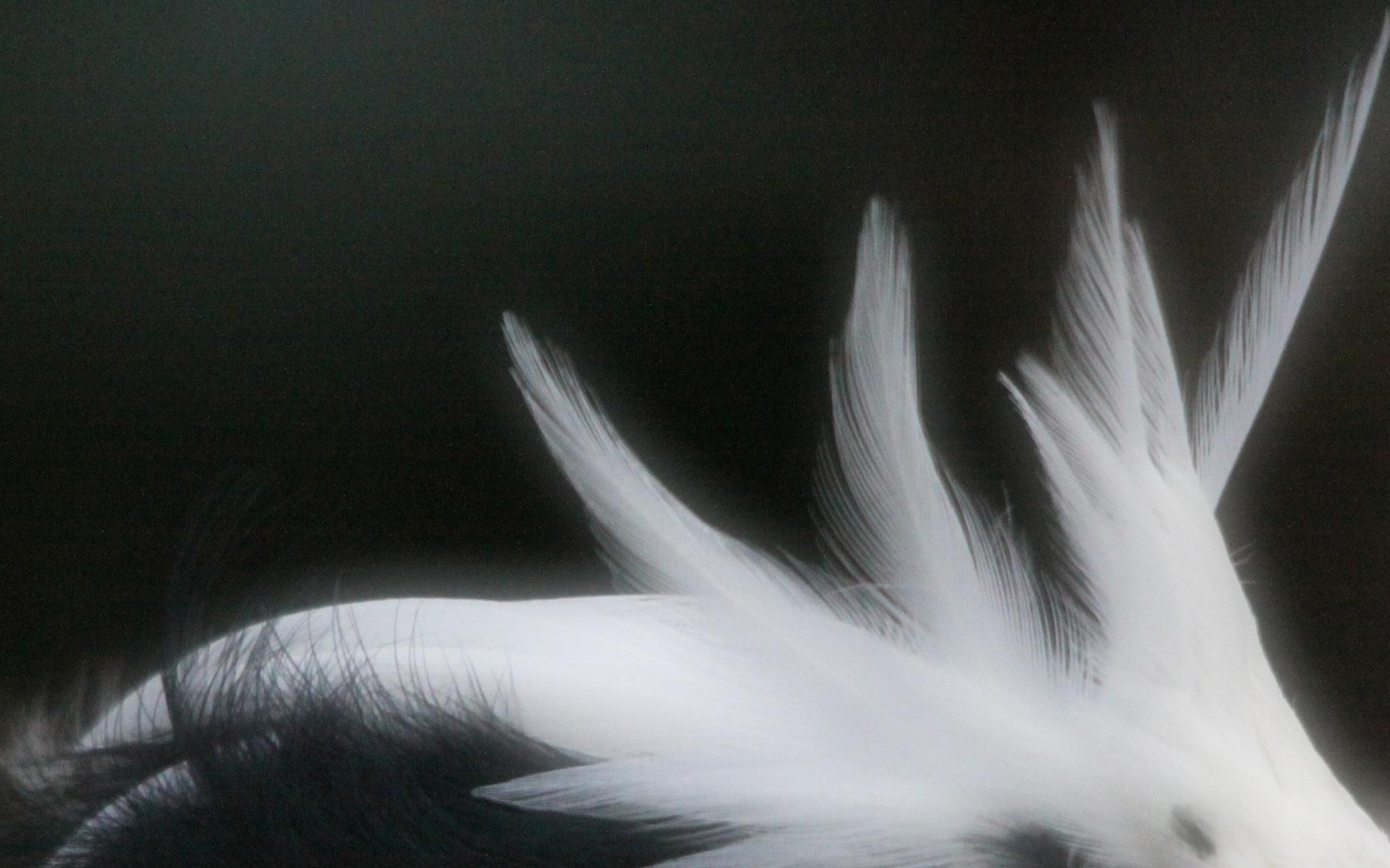 Artistic Feathers by Kaje