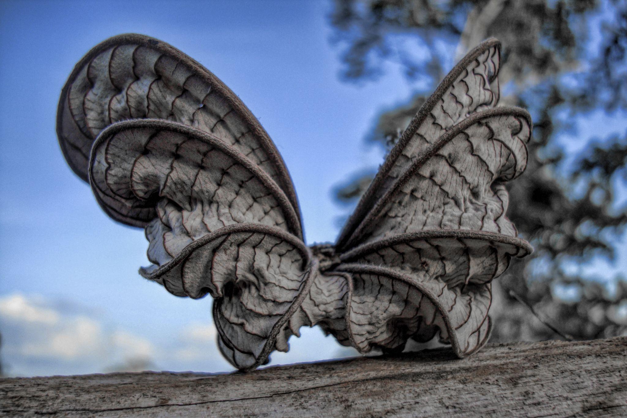 """Butterfly"" by PJSPhotography"