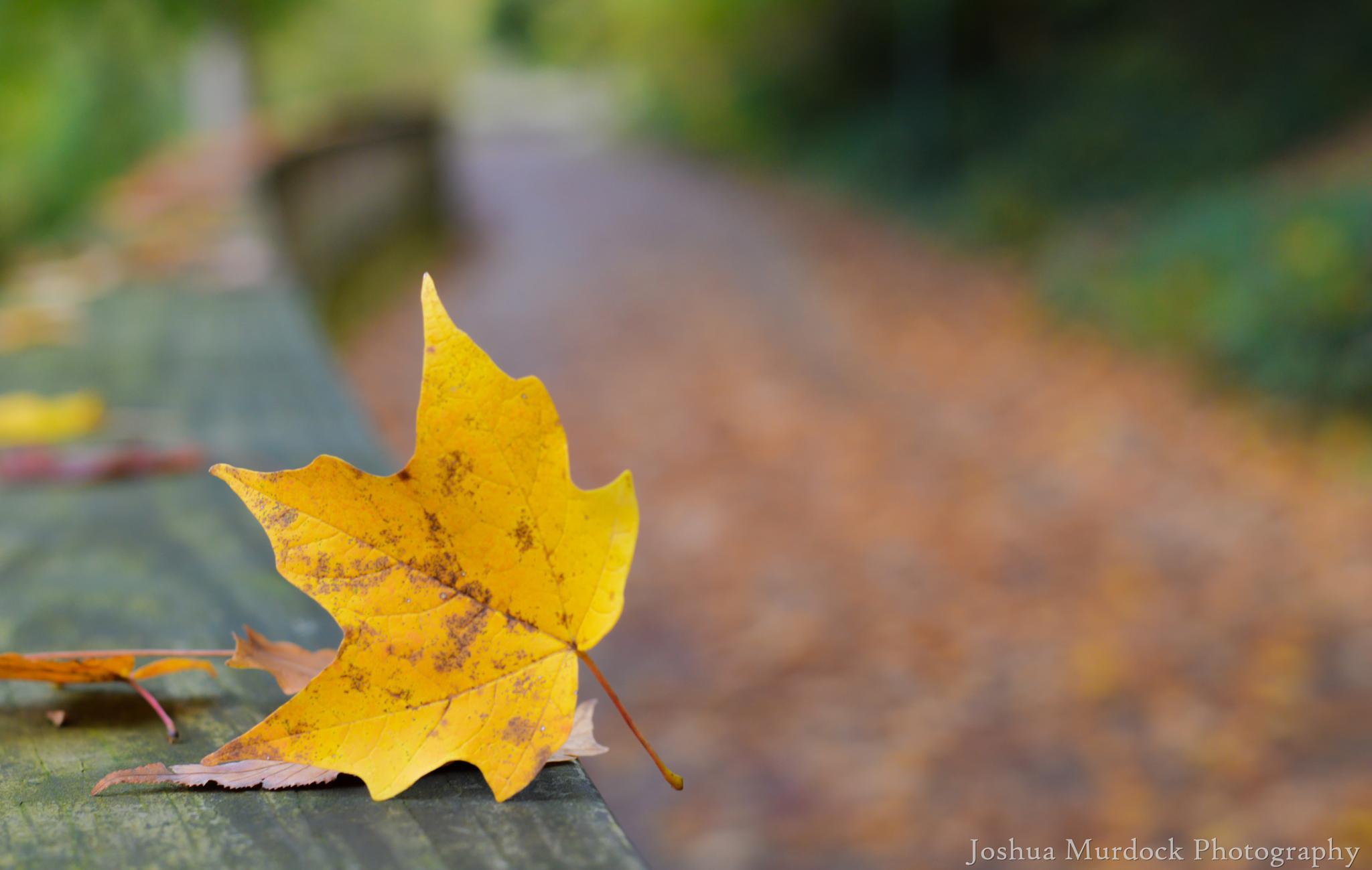 Nature Smiling by Joshua Murdock -     Murdock Photography