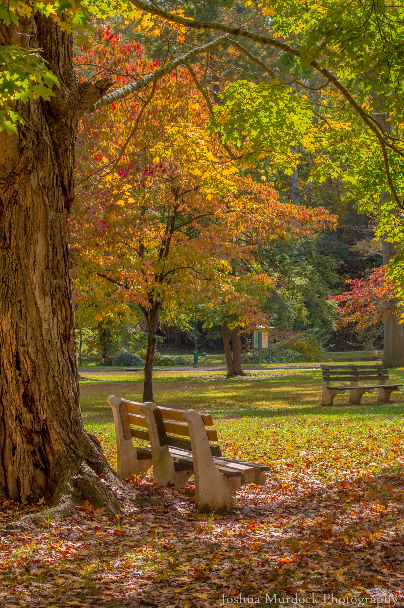 Photo in Nature #park #trees #fall #colors #bench #parks #leafs