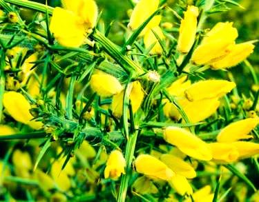 Photo in Nature #flowers #natur #colors #beatiful