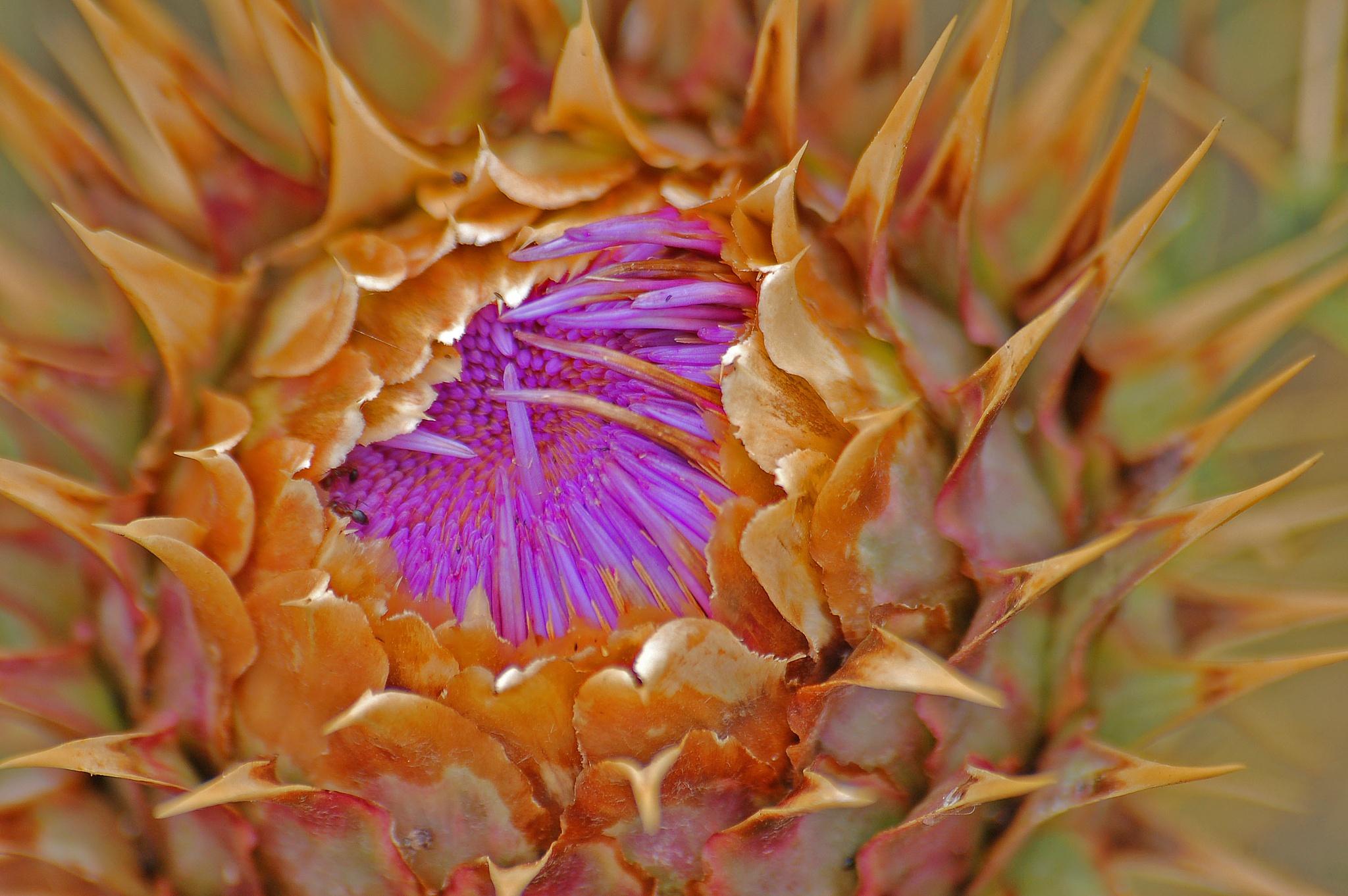 Flower by Paulo Alexandre Alves