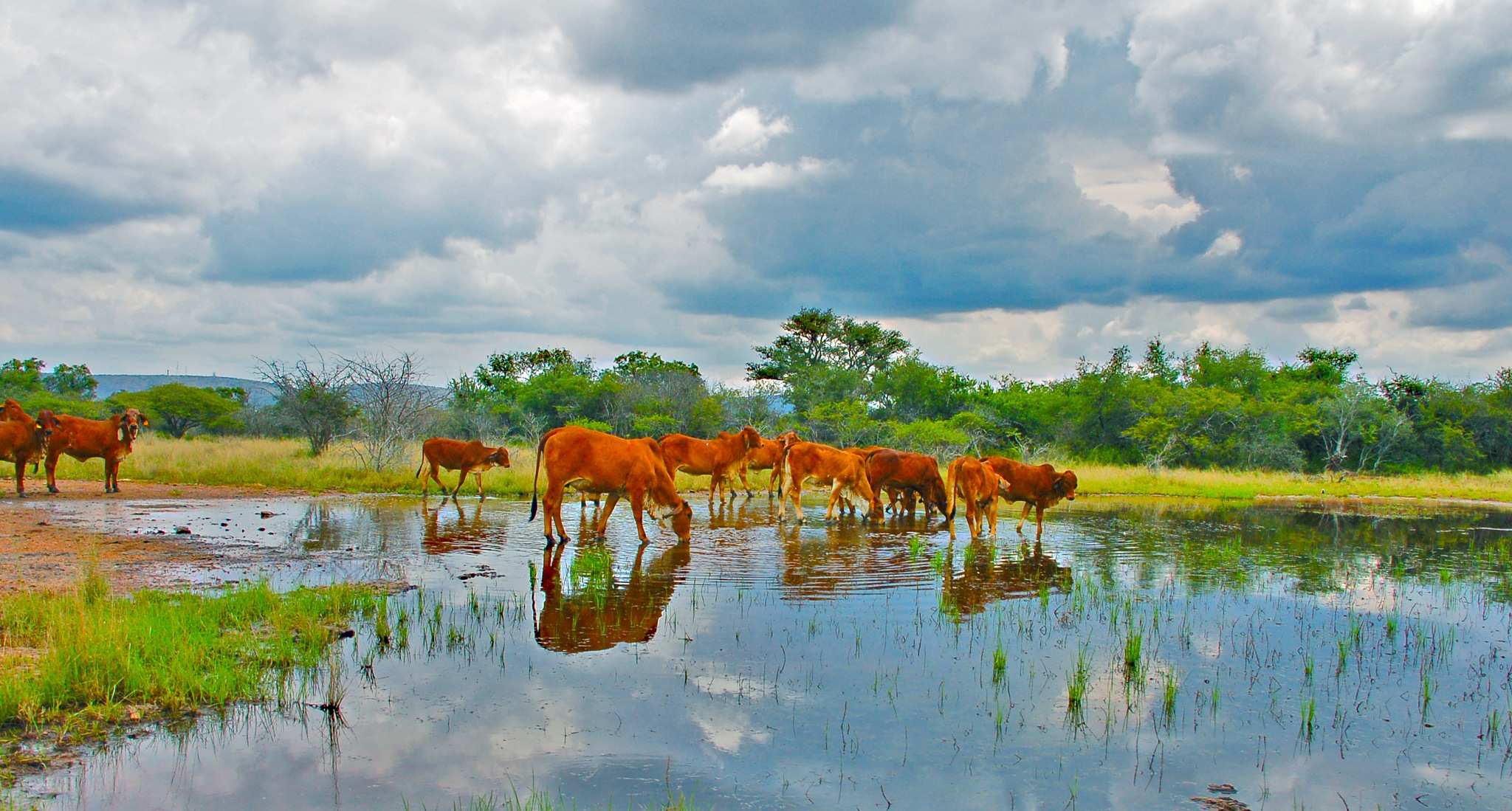 Photo in Animal #animals #beautiful #nature #africa