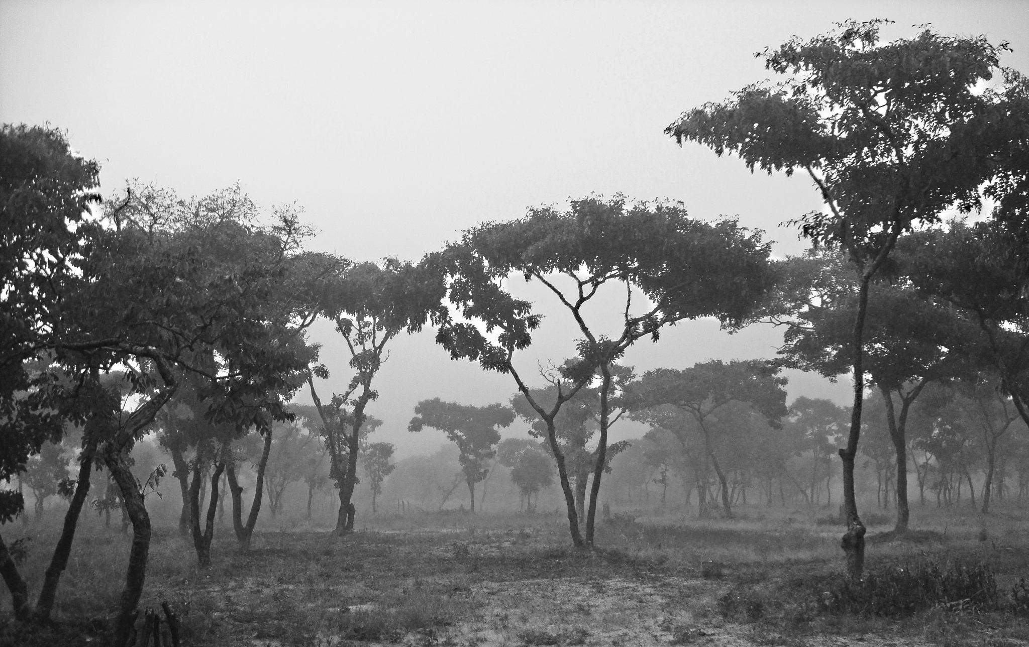 Morning Fog by Paulo Alexandre Alves