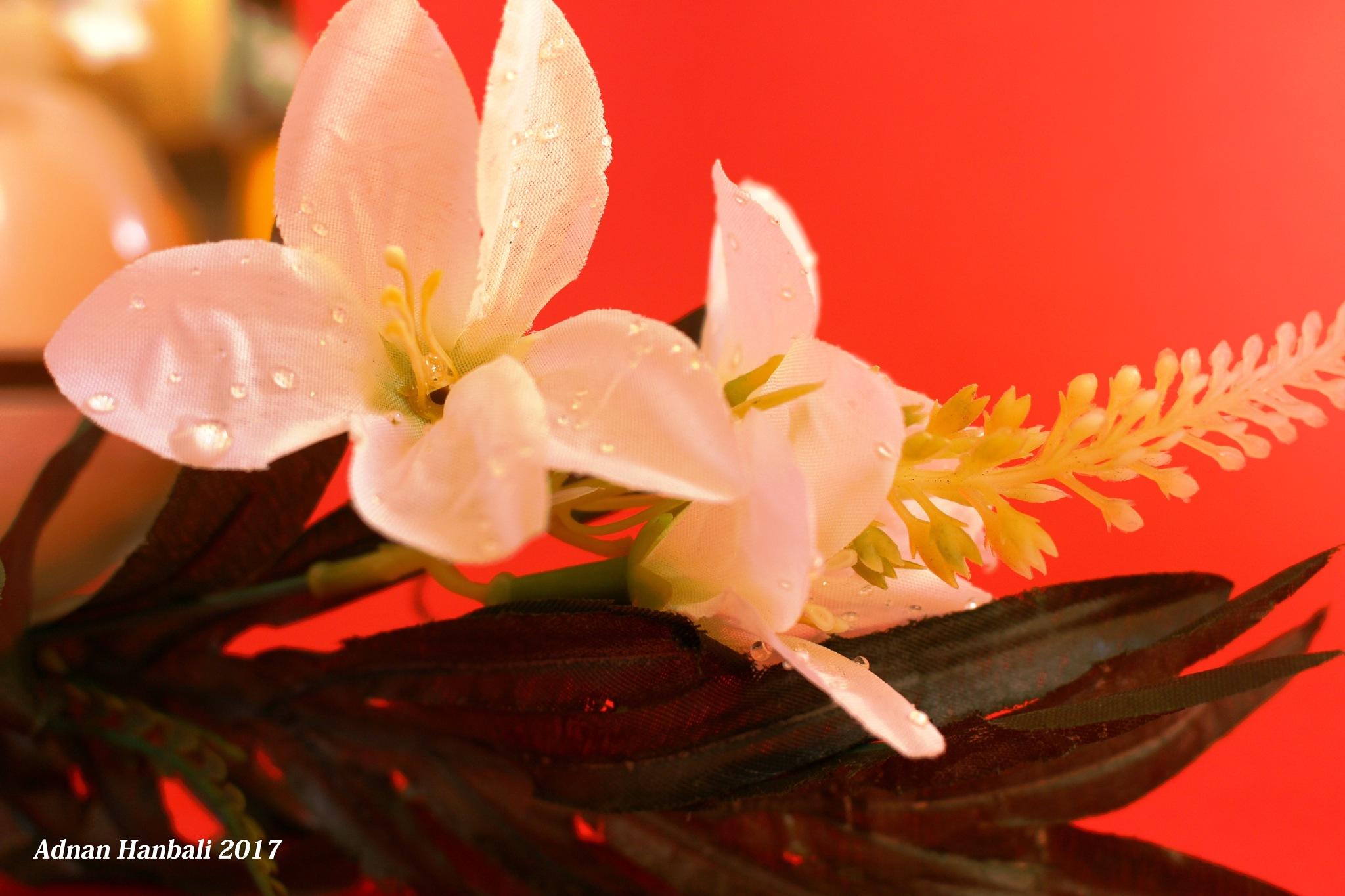 2 FLOWERS by ADNANHANBALI
