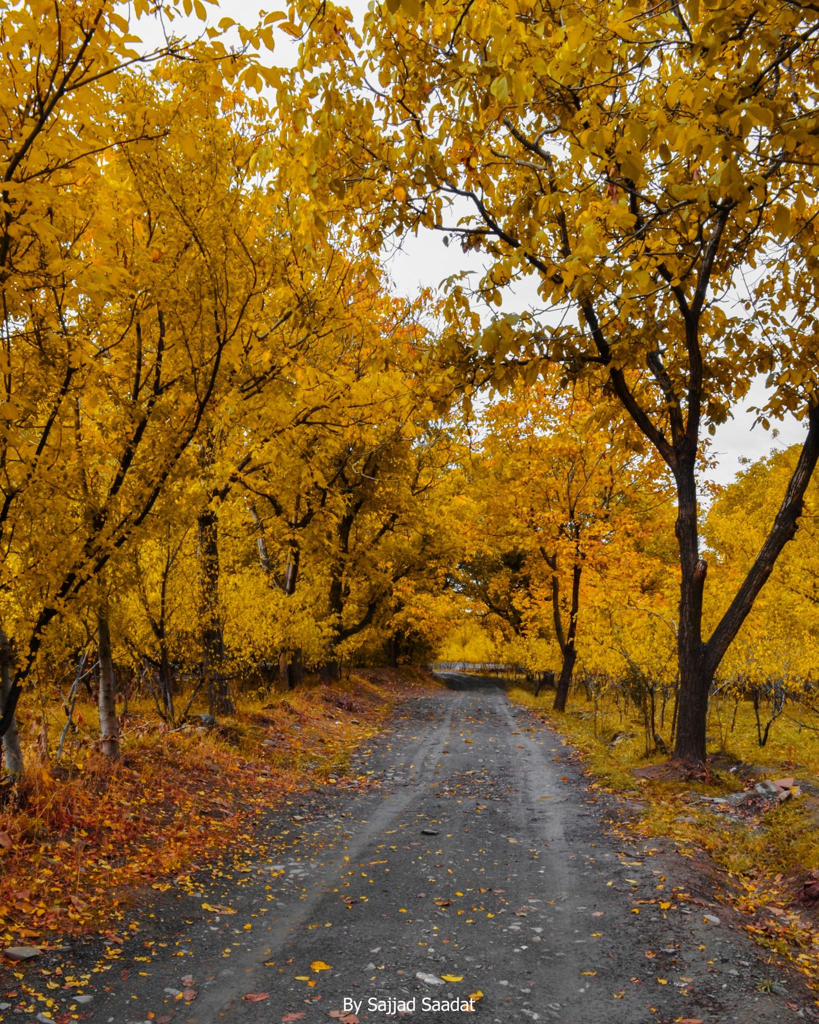 Autumn by SajjadPix