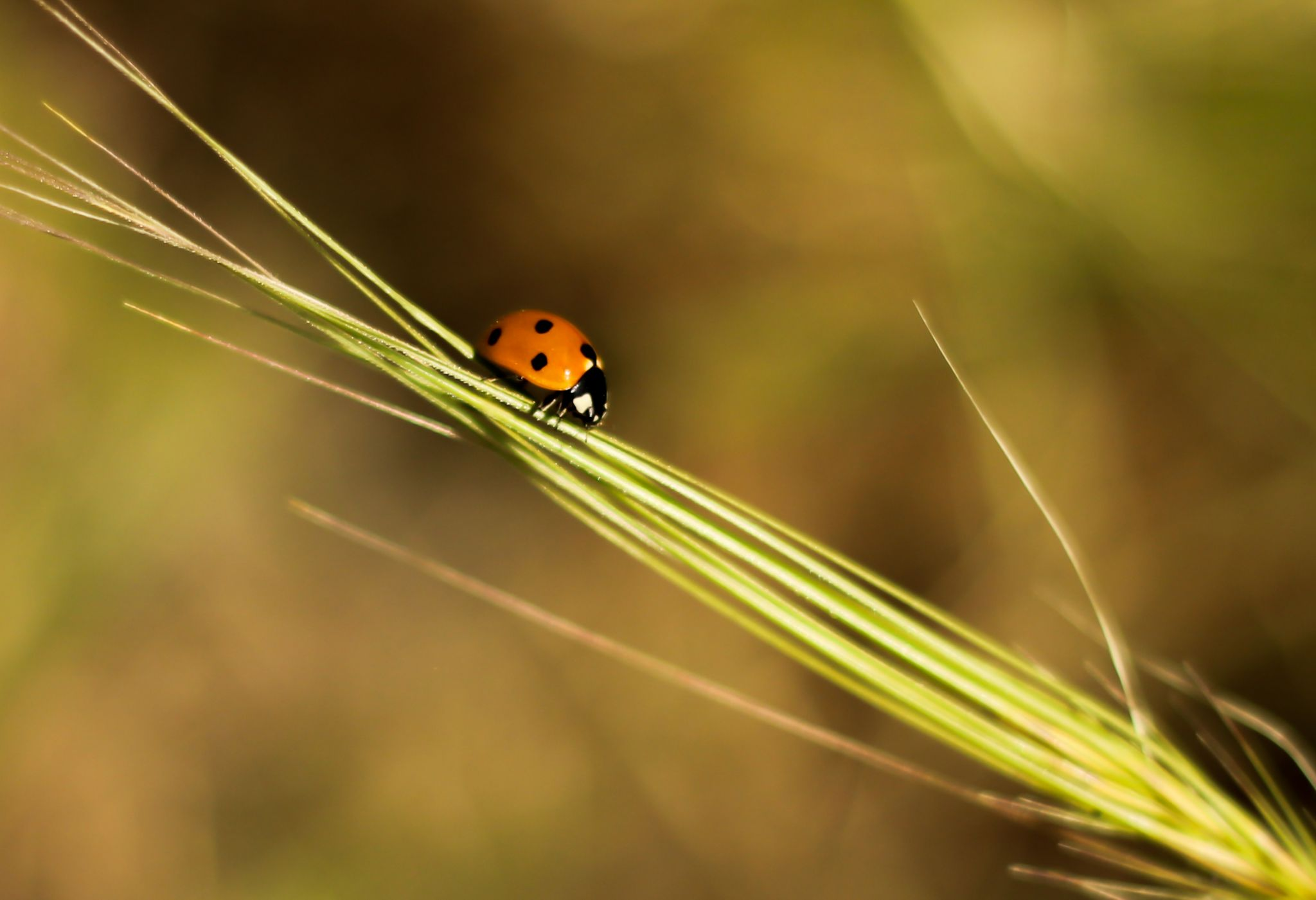 little red by Babak Rzg