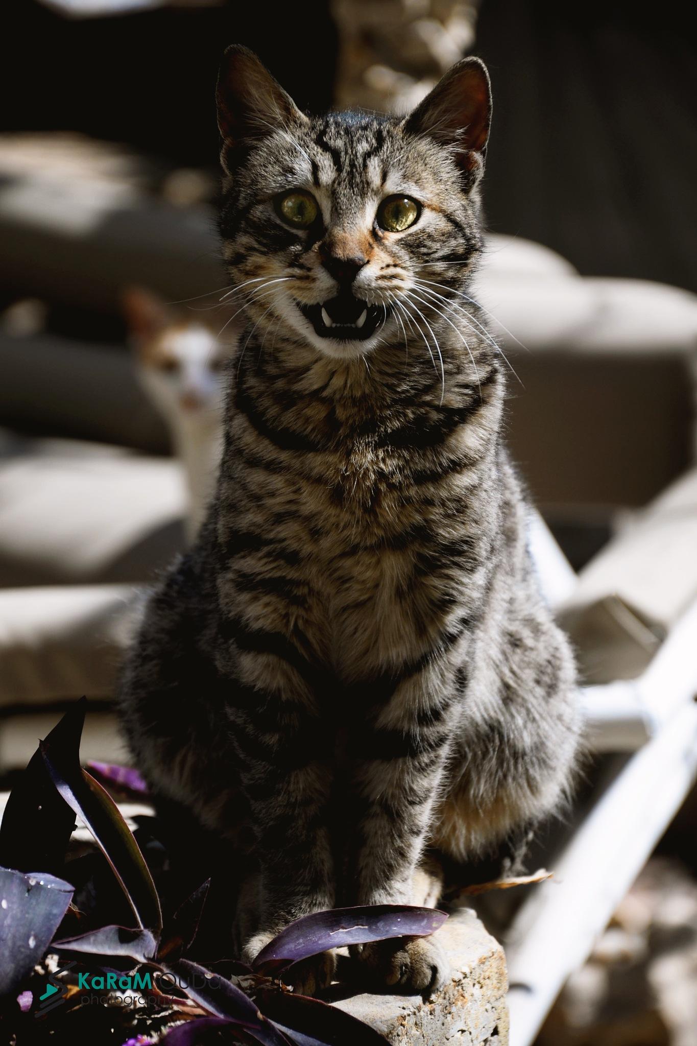 cat by KaRam OuDa