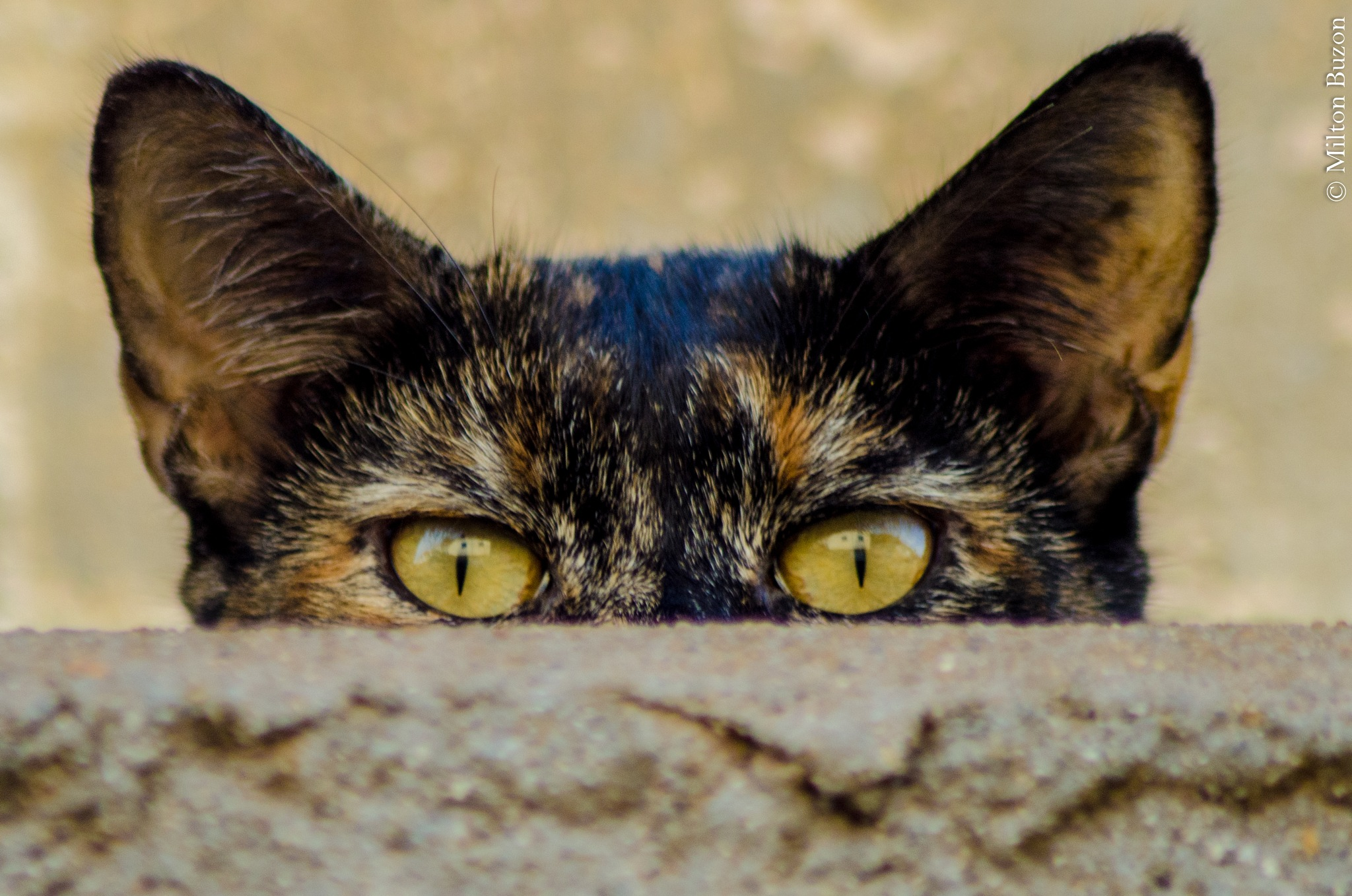 I'm seeing you human !!! by Milton Buzon