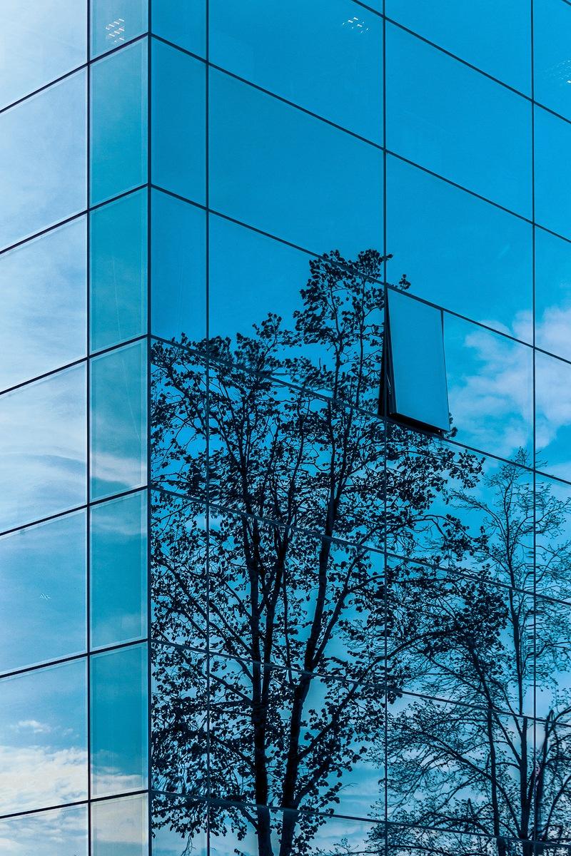 The last tree  by Ruslan  Bolgov (Axe Photography)